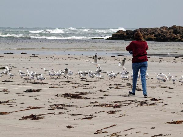 Yvonne-Seagulls-4.jpeg
