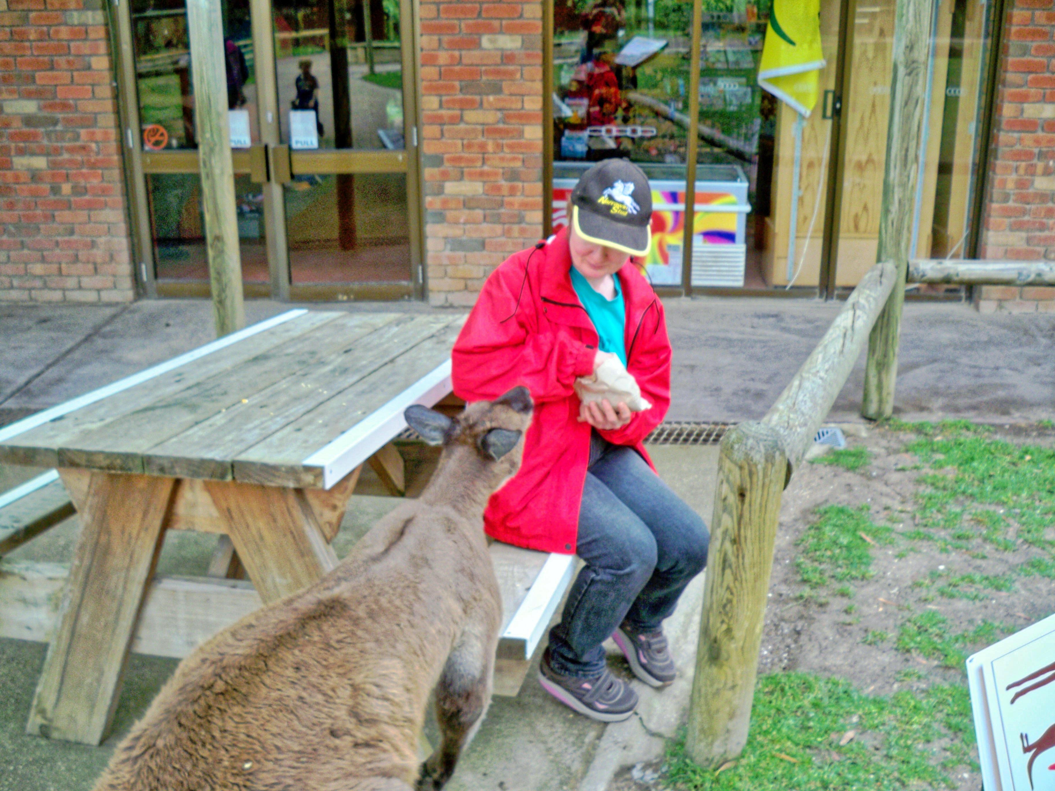 Carola-kangaroos-1.jpeg