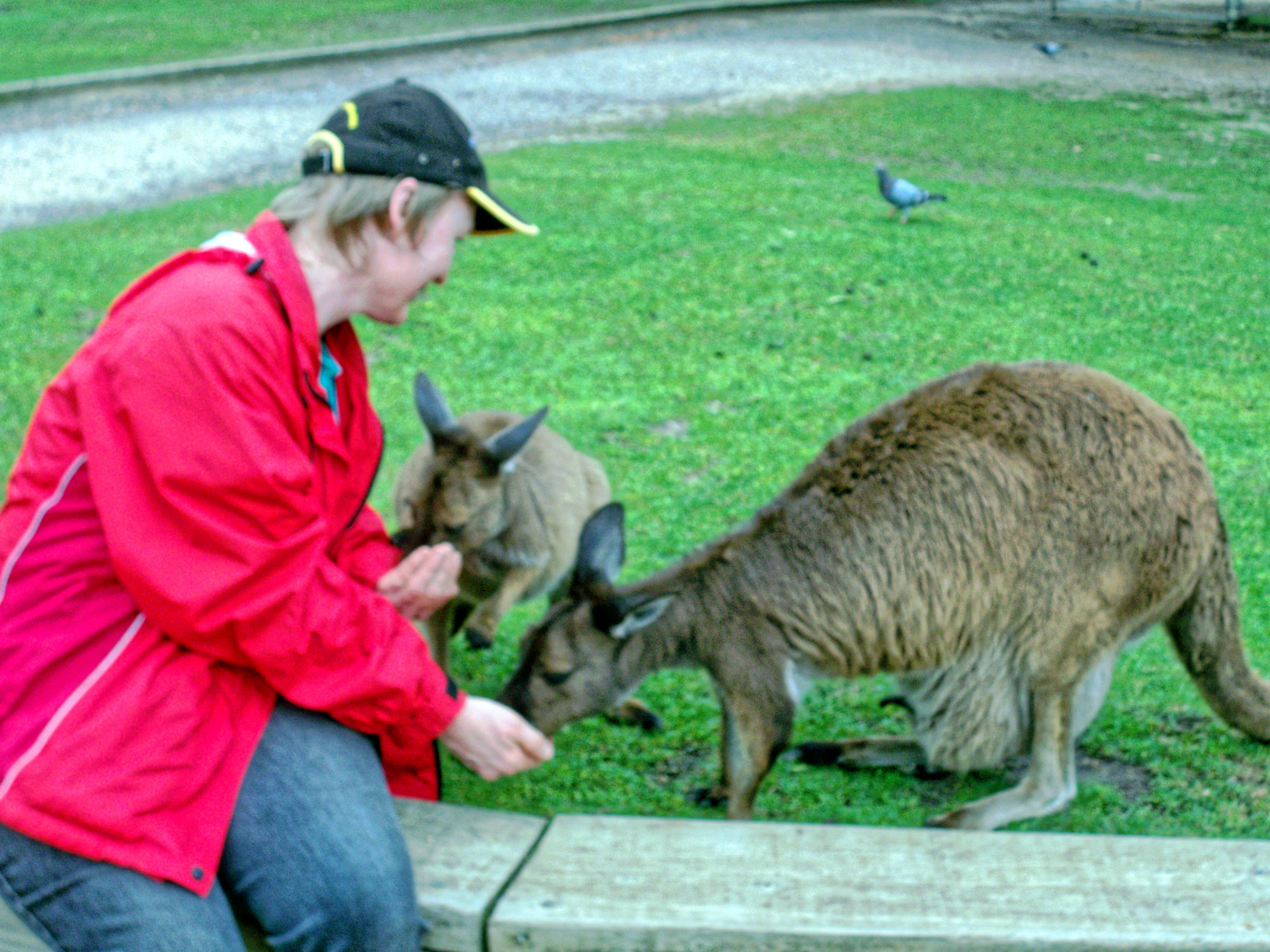 Carola-kangaroos-11.jpeg