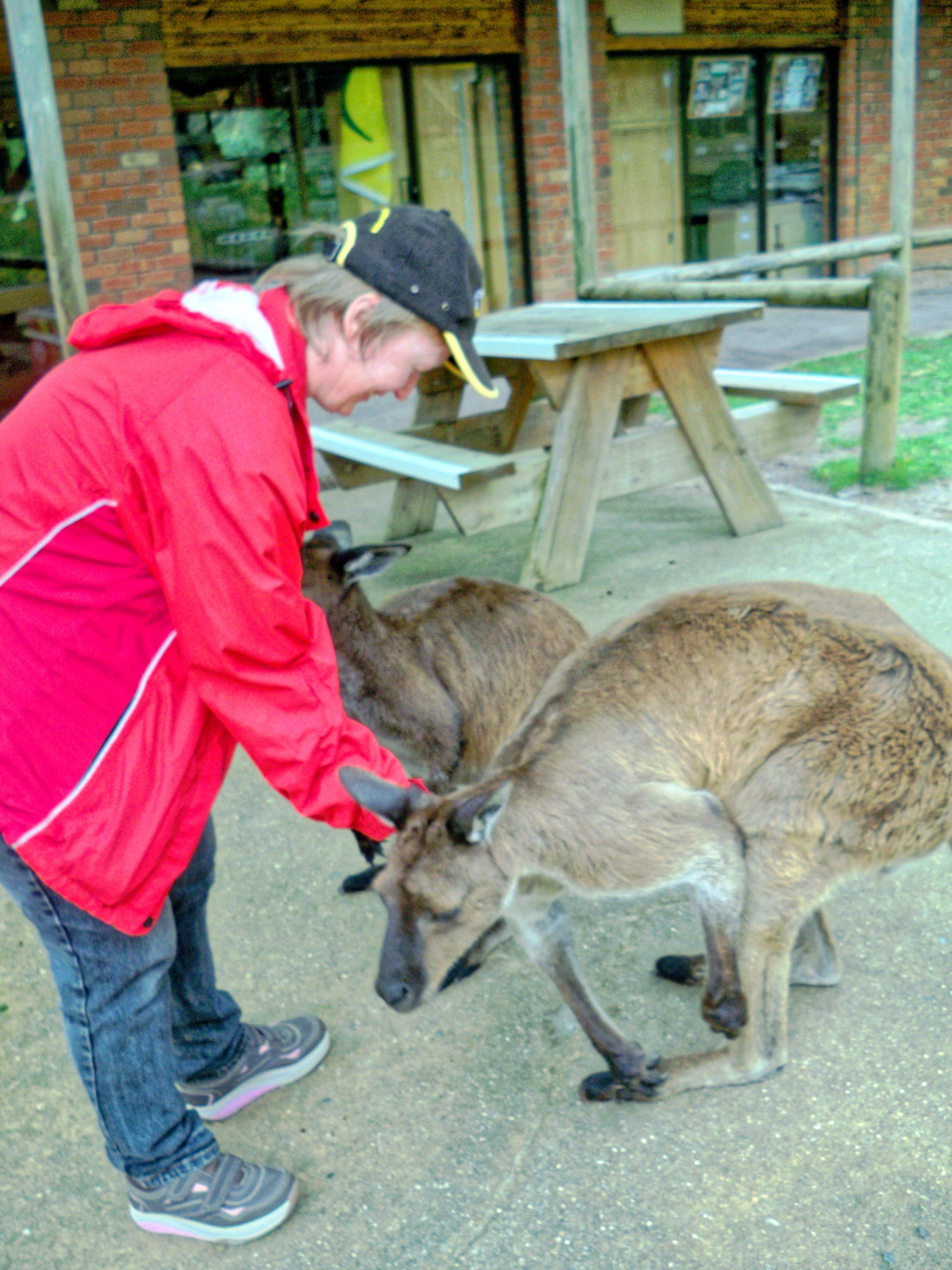Carola-kangaroos-3.jpeg