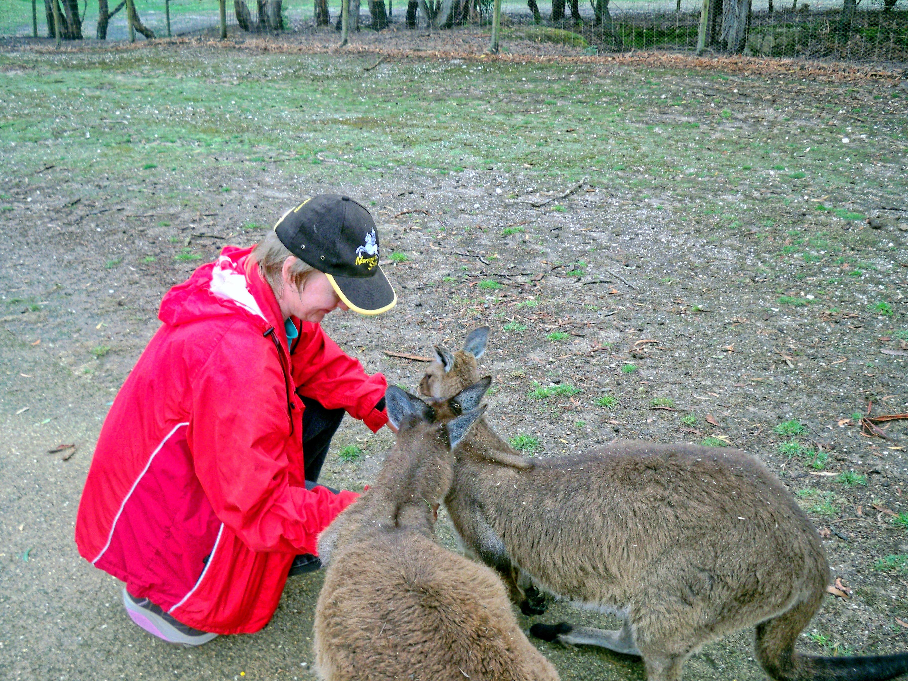 Carola-kangaroos-8.jpeg