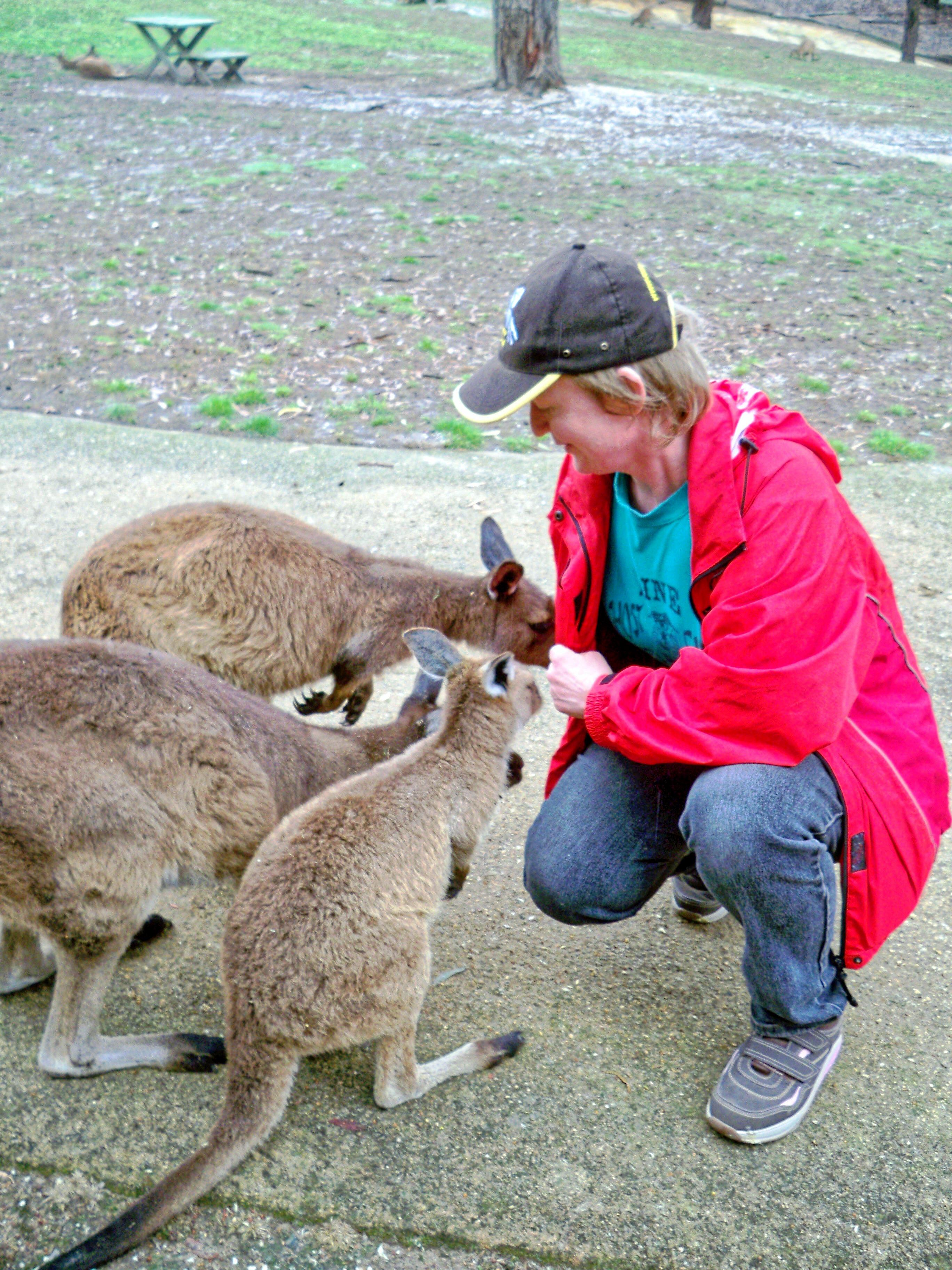 Carola-kangaroos-9.jpeg