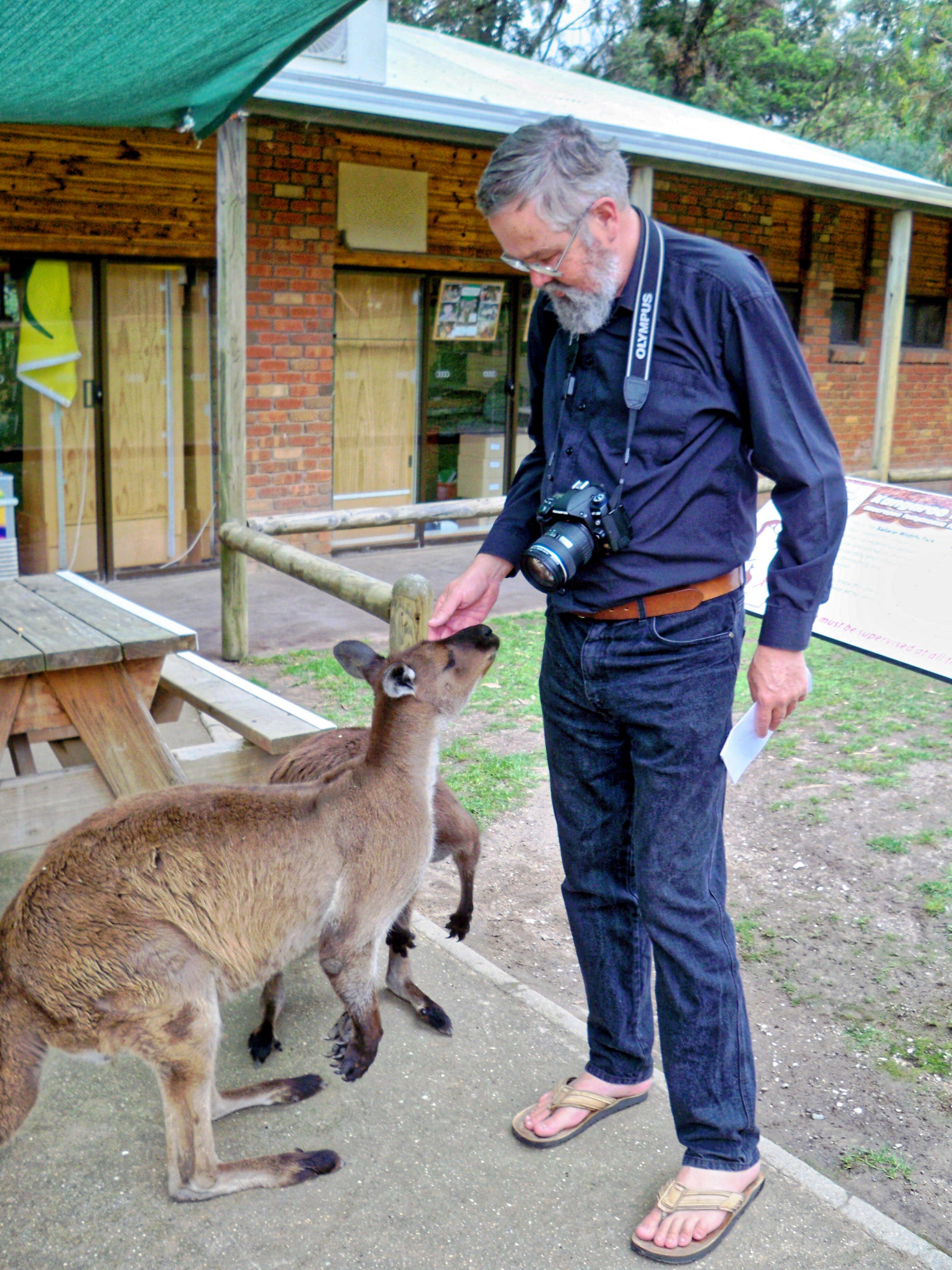 Greg-kangaroos-1.jpeg