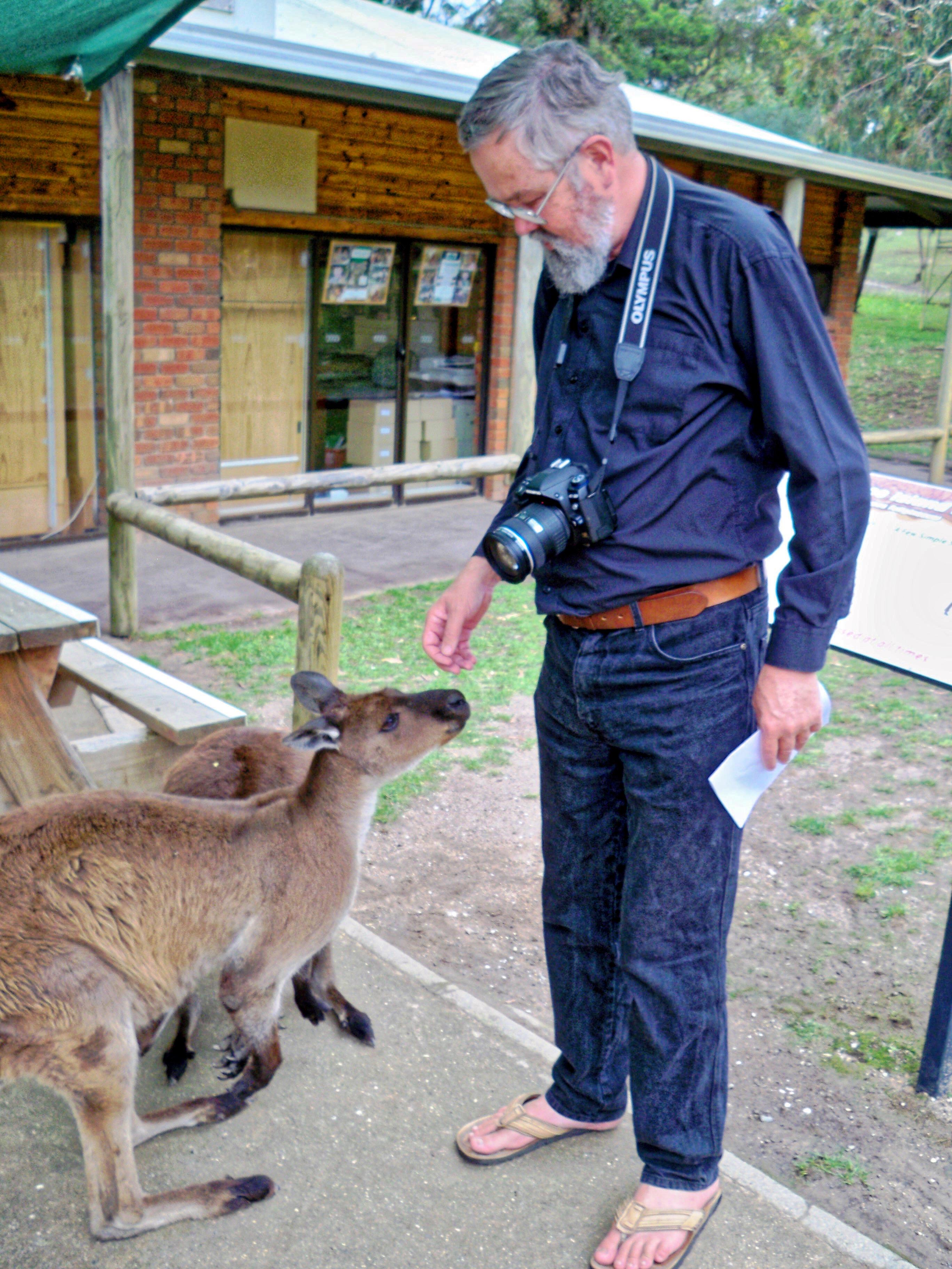 Greg-kangaroos-2.jpeg