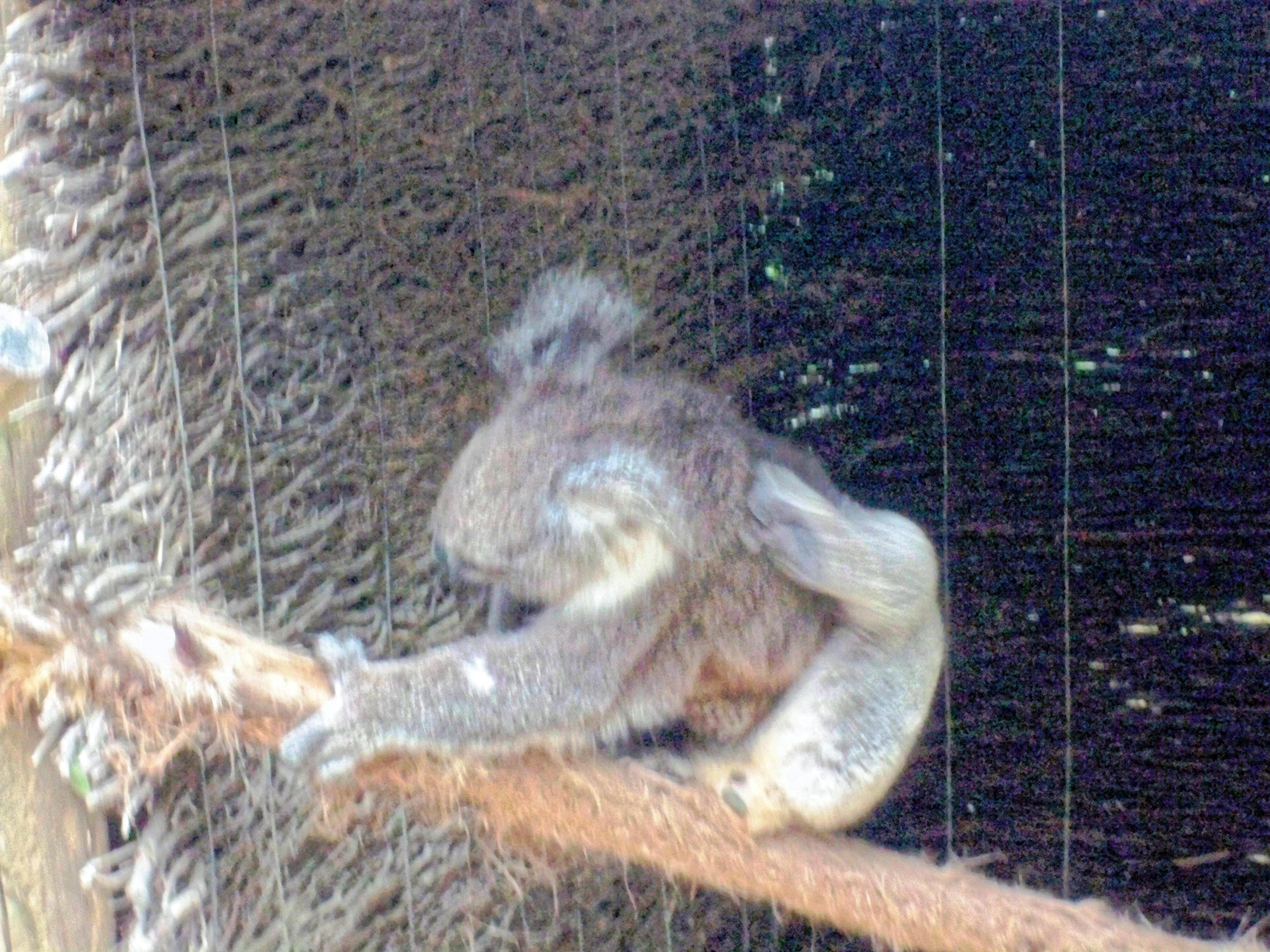 Koala-9.jpeg