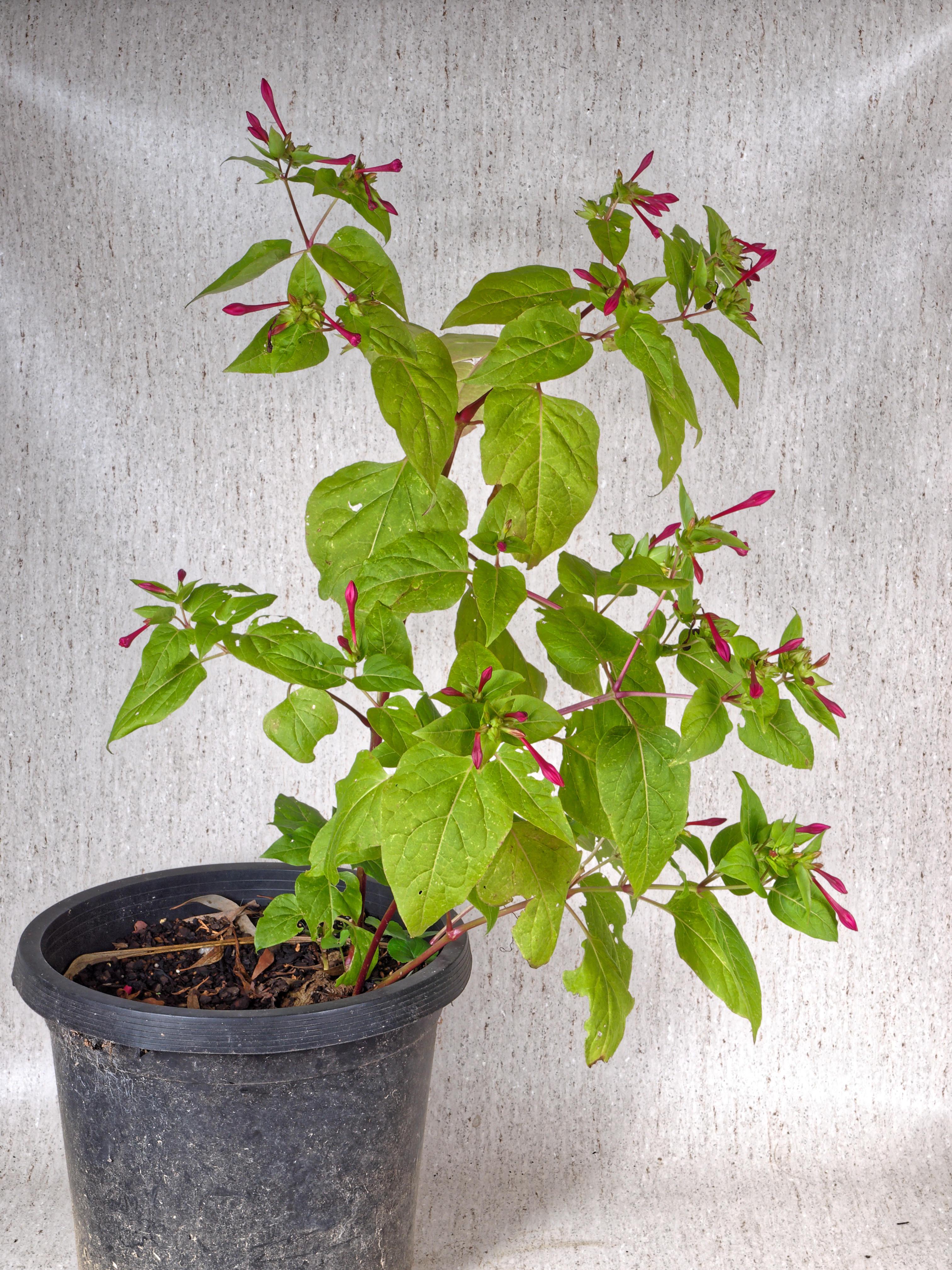 Mystery-plant-16.jpeg