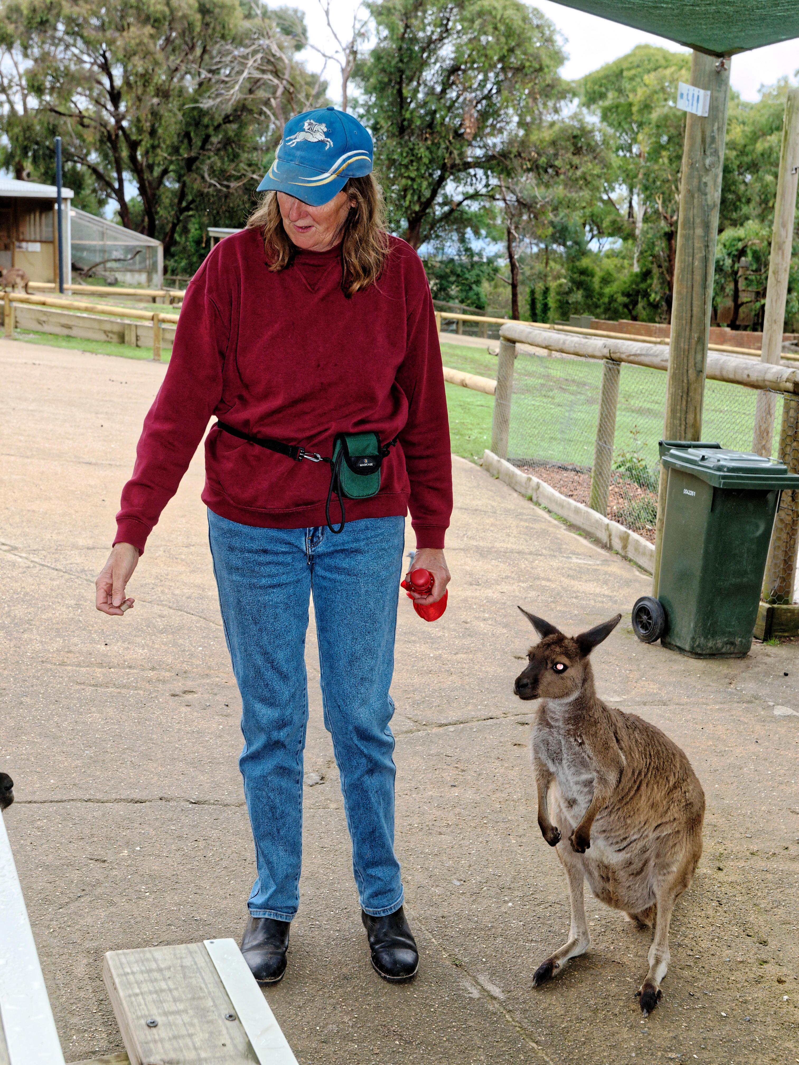 Yvonne-kangaroos-1.jpeg