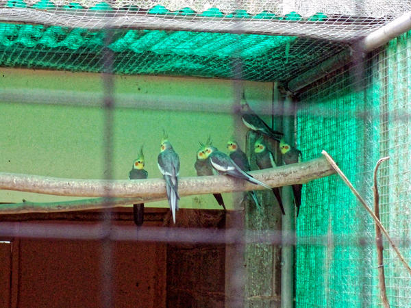 Bird-world-54.jpeg