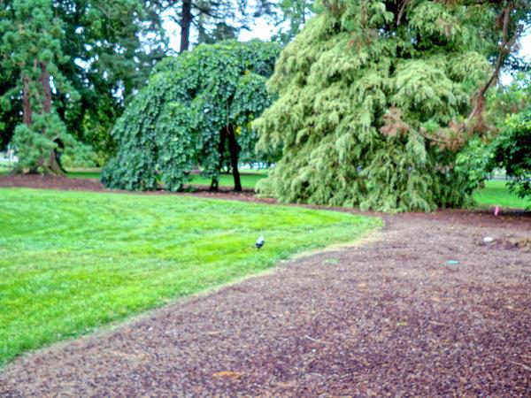 Botanical-gardens-3.jpeg