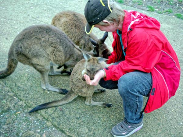 Carola-kangaroos-10.jpeg