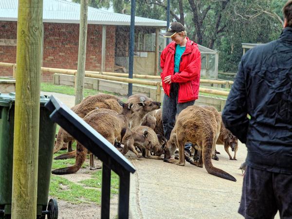 Carola-kangaroos-12.jpeg