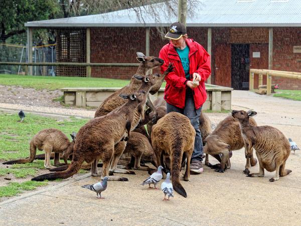 Carola-kangaroos-13.jpeg