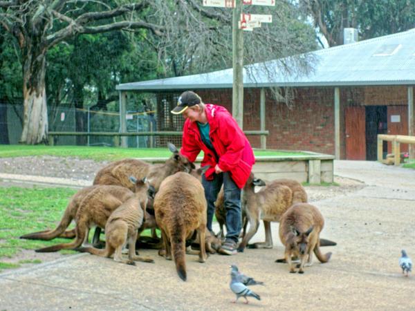 Carola-kangaroos-17.jpeg