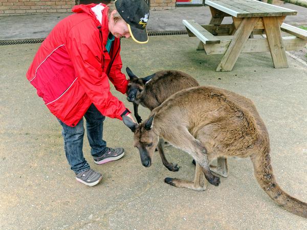 Carola-kangaroos-5.jpeg