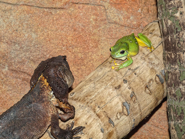 Frogs-and-dragons-4.jpeg