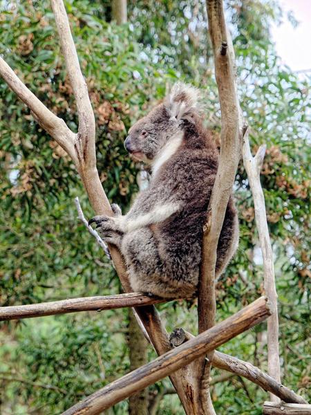 Koala-6.jpeg