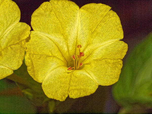 Mystery-plant-19.jpeg