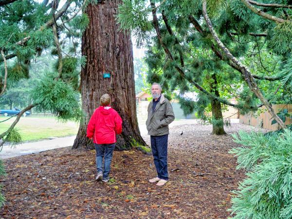Sequoiadendron-giganteum-3.jpeg