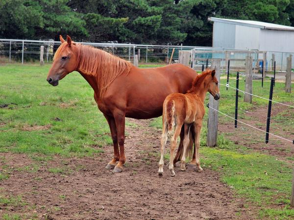 Reina-and-filly-1.jpeg