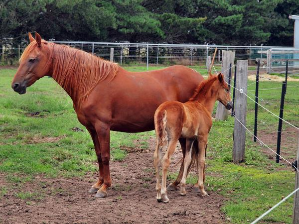 Reina-and-filly-2.jpeg