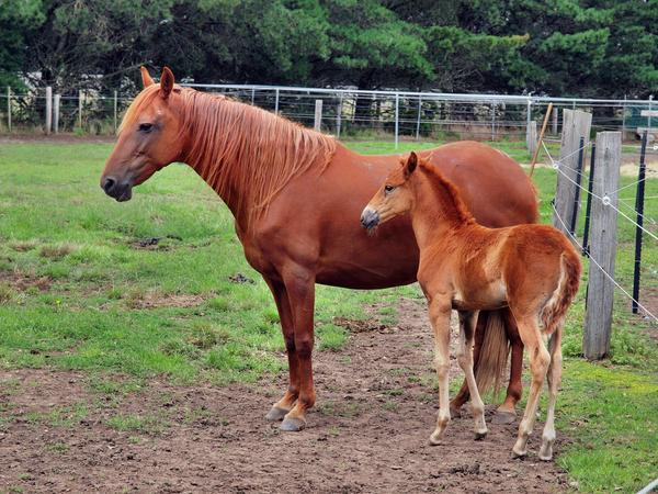 Reina-and-filly-3.jpeg