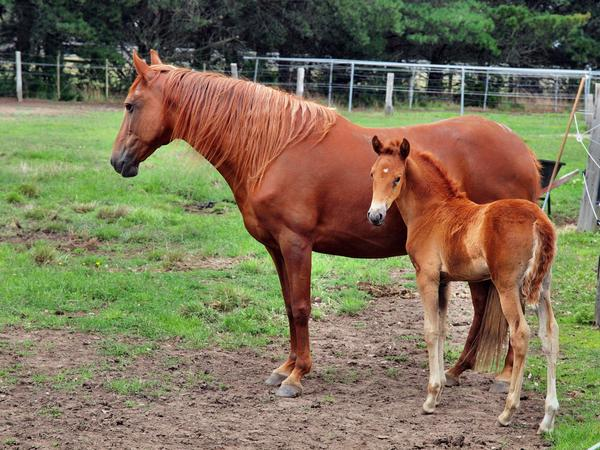 Reina-and-filly-4.jpeg