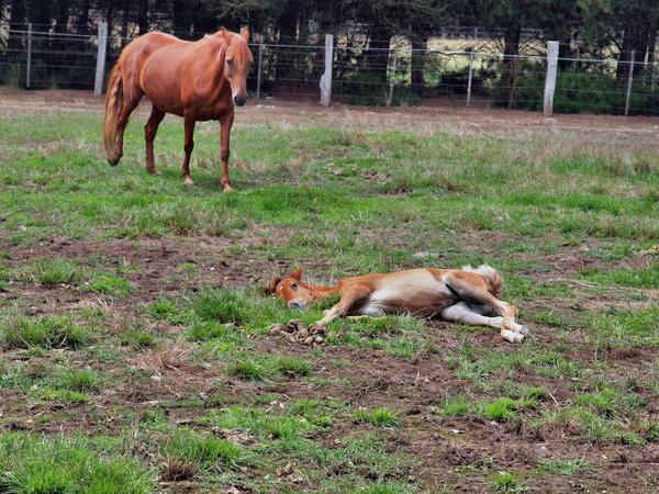 Reina-and-filly-6.jpeg