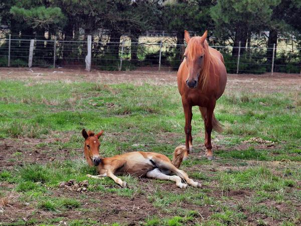 Reina-and-filly-8.jpeg
