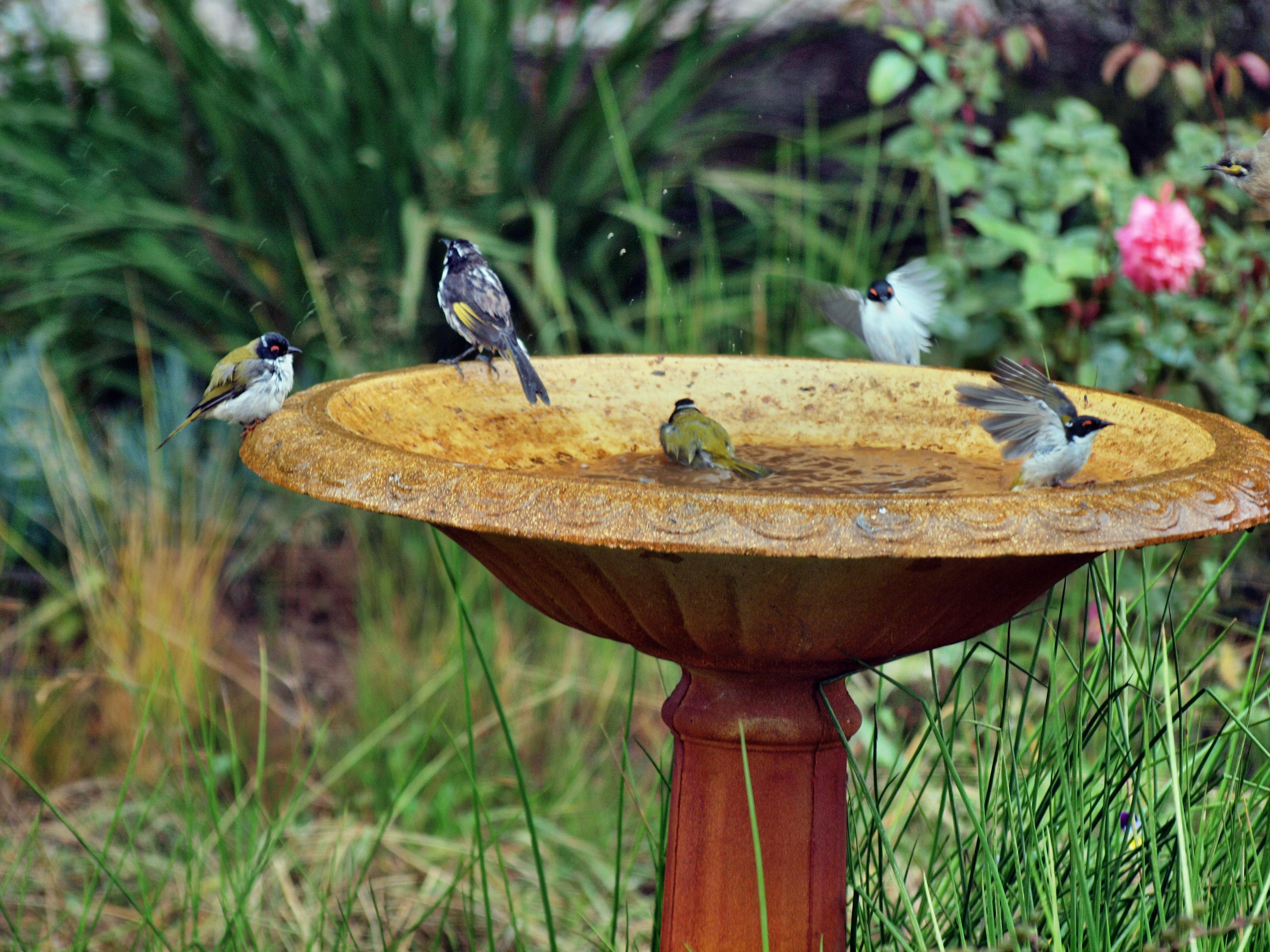 Bird-bath-1.jpeg