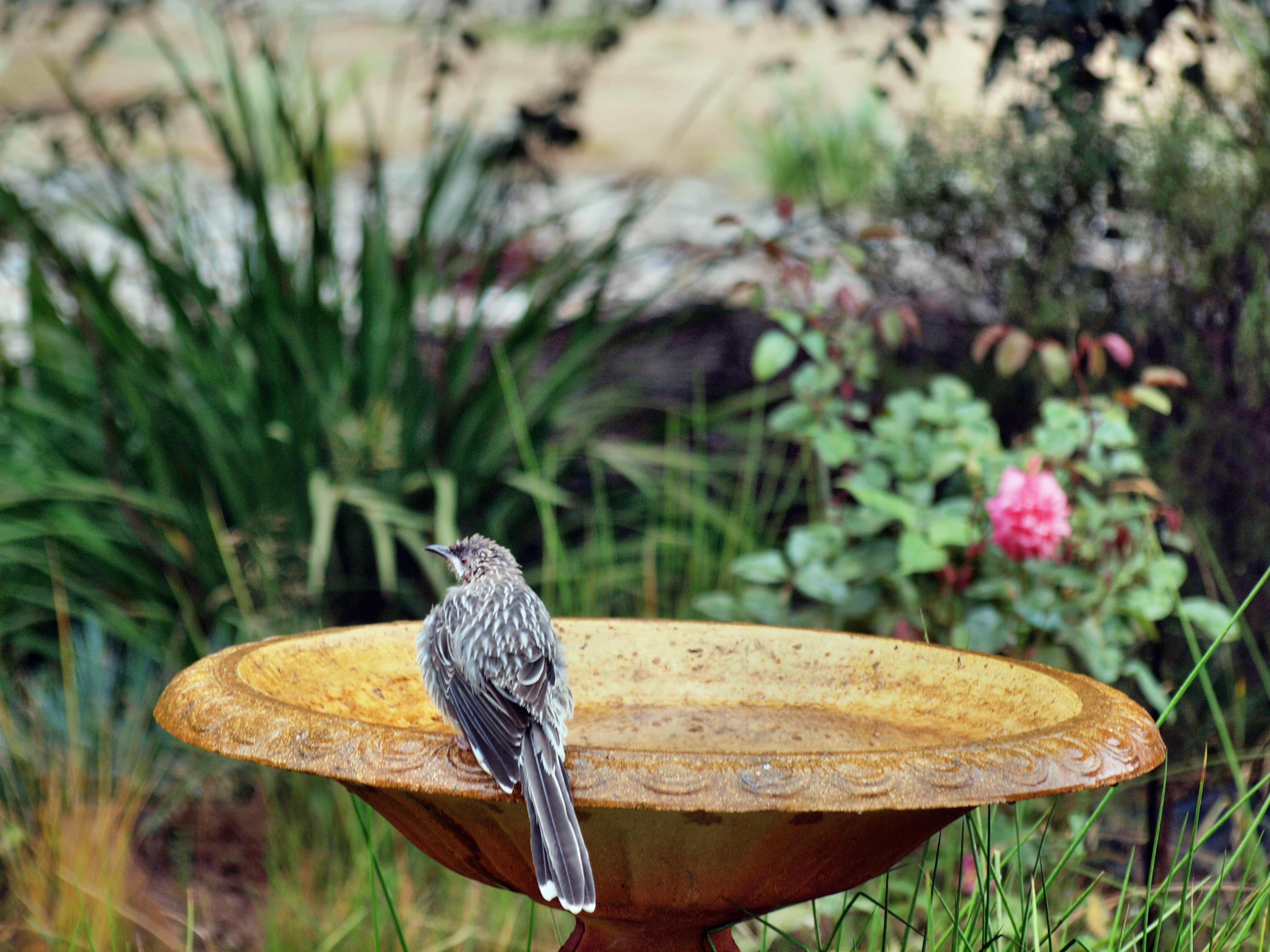 Bird-bath-12.jpeg
