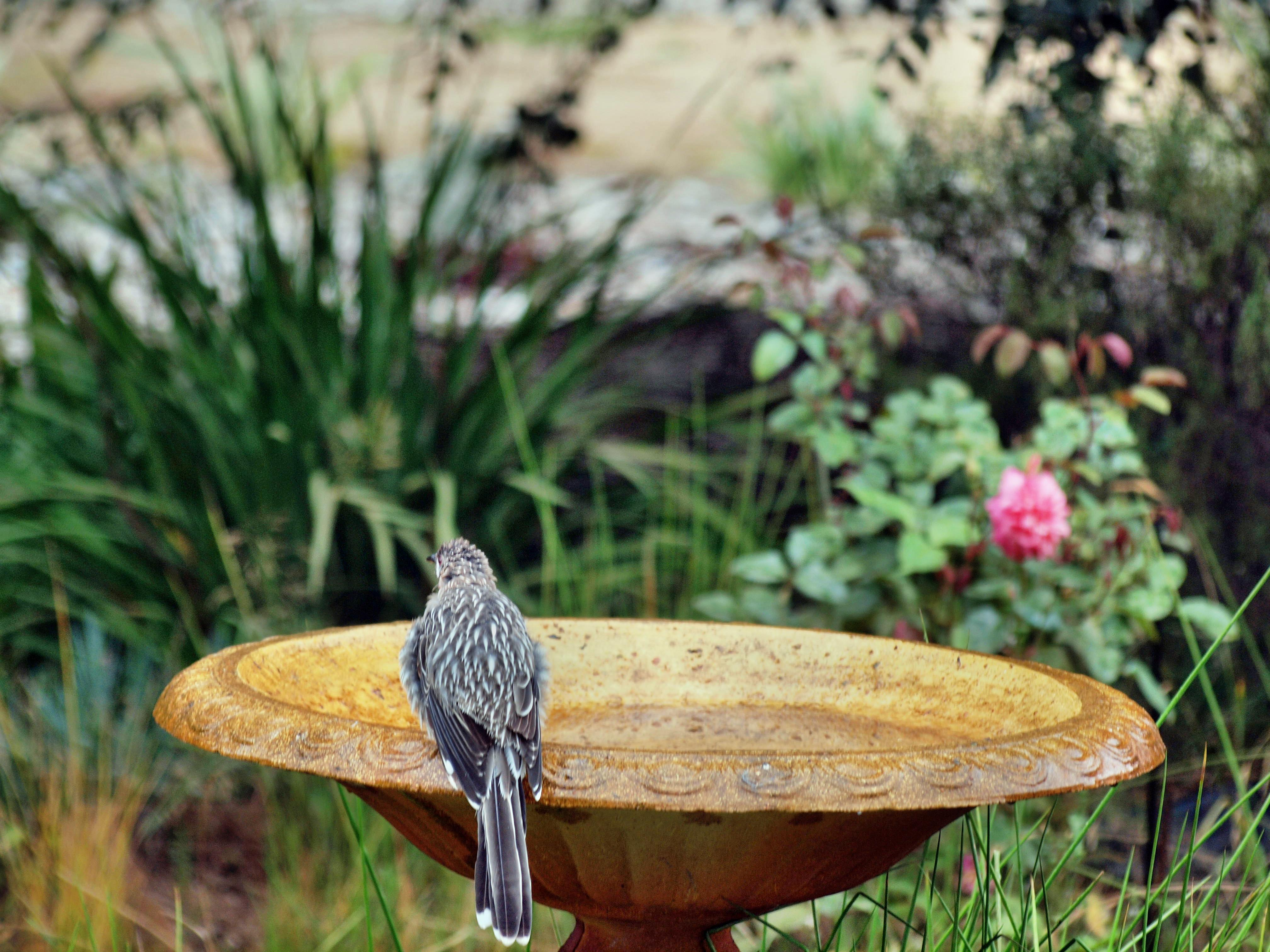 Bird-bath-13.jpeg