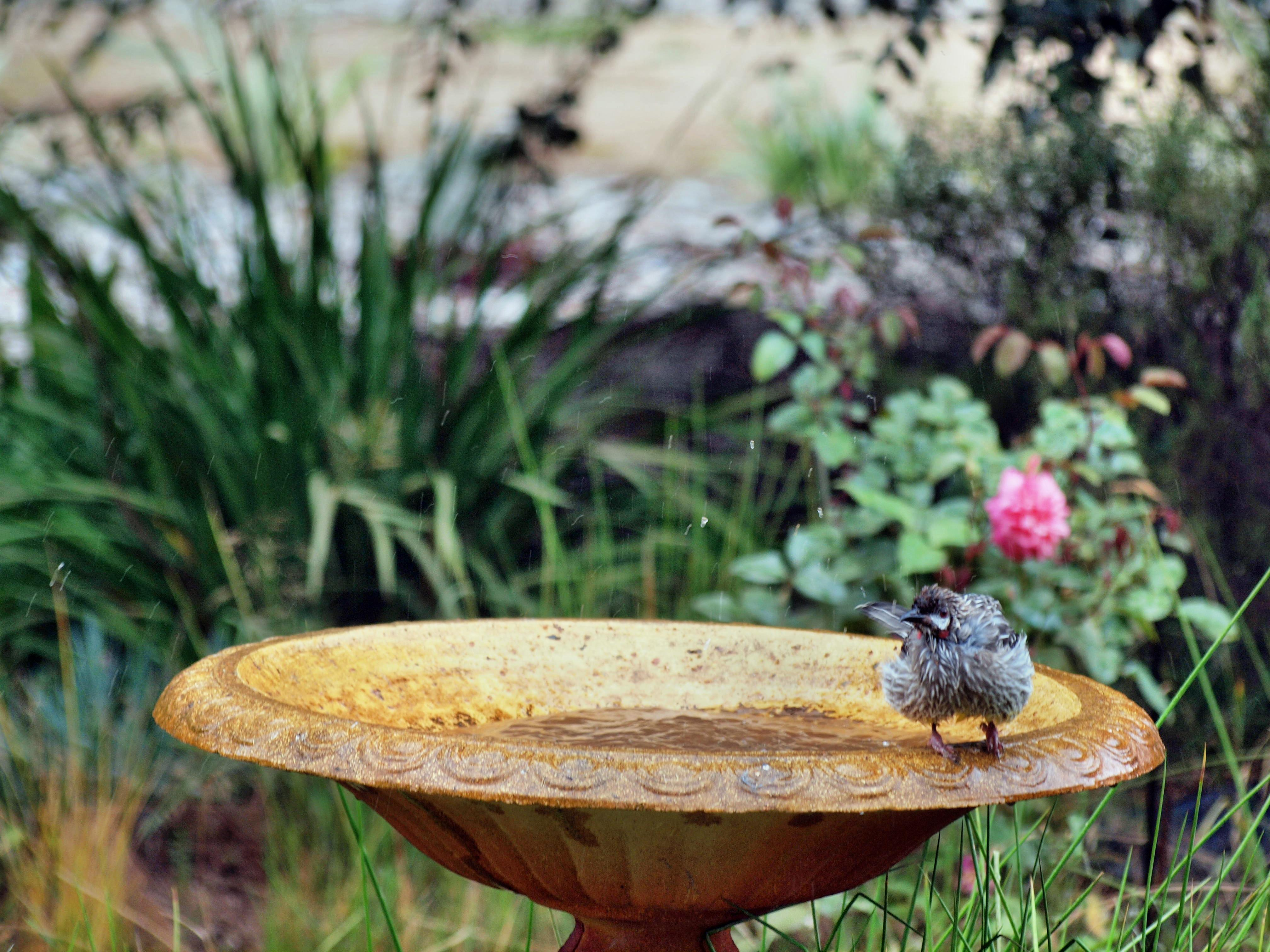 Bird-bath-15.jpeg