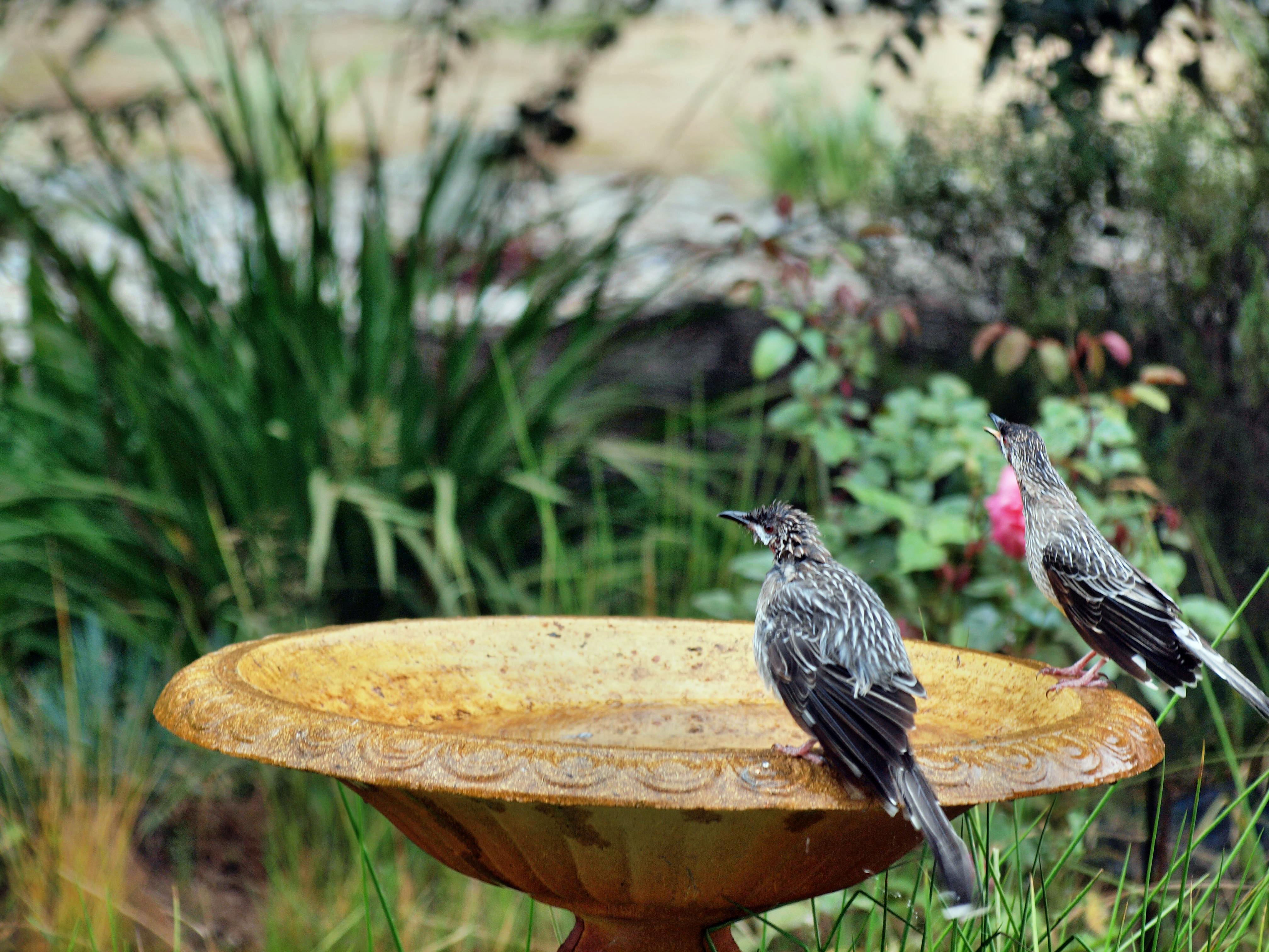 Bird-bath-17.jpeg