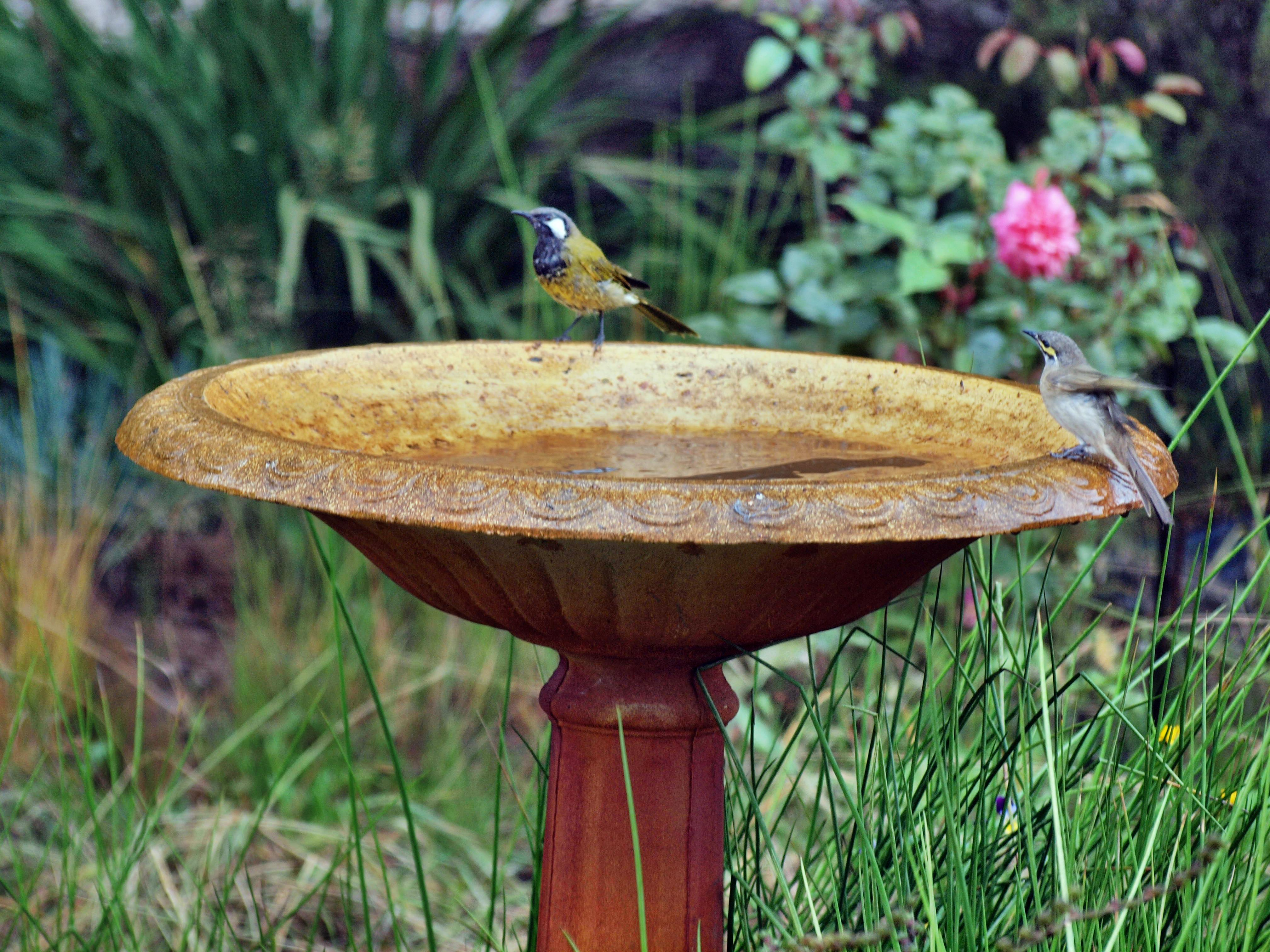 Bird-bath-2.jpeg