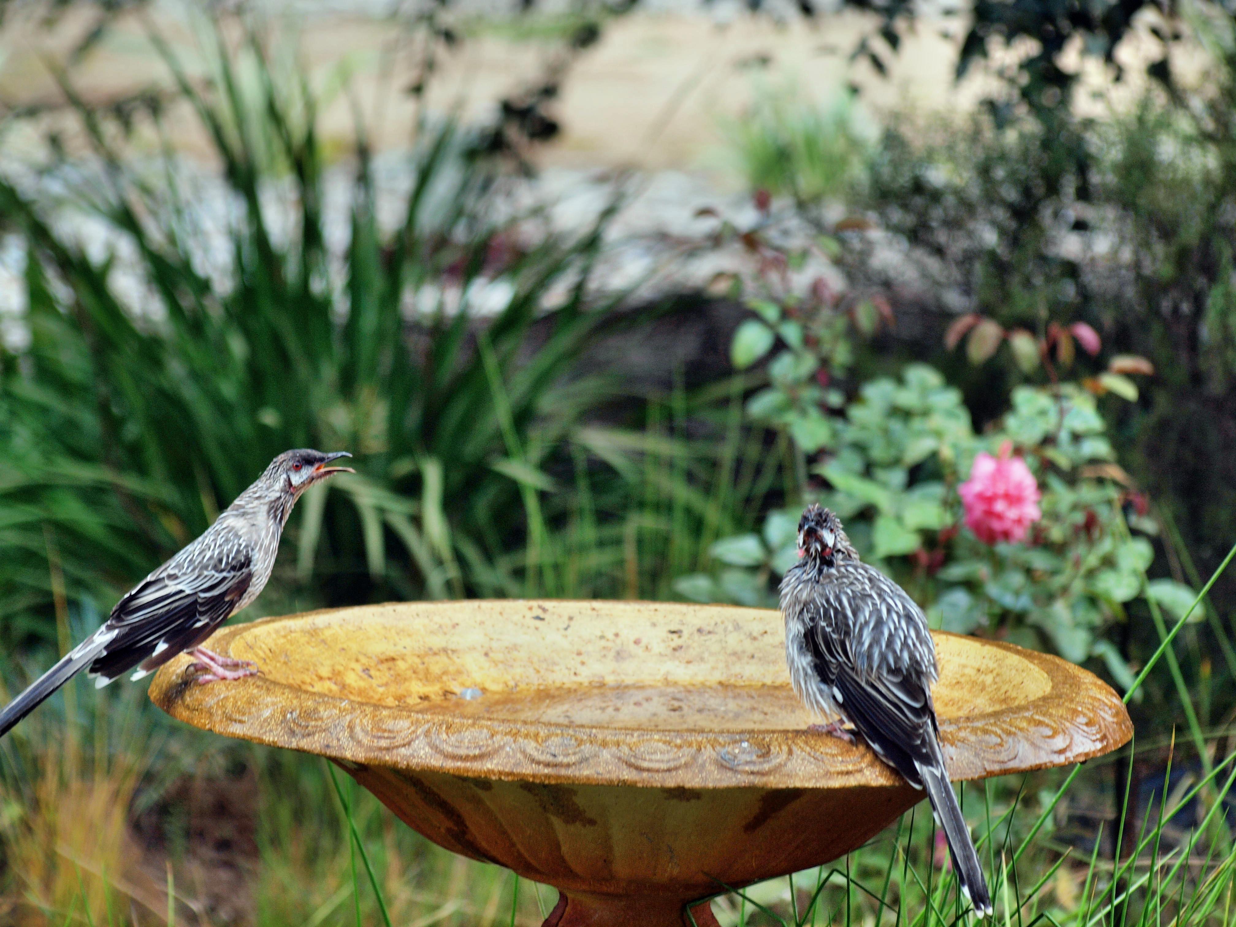 Bird-bath-21.jpeg