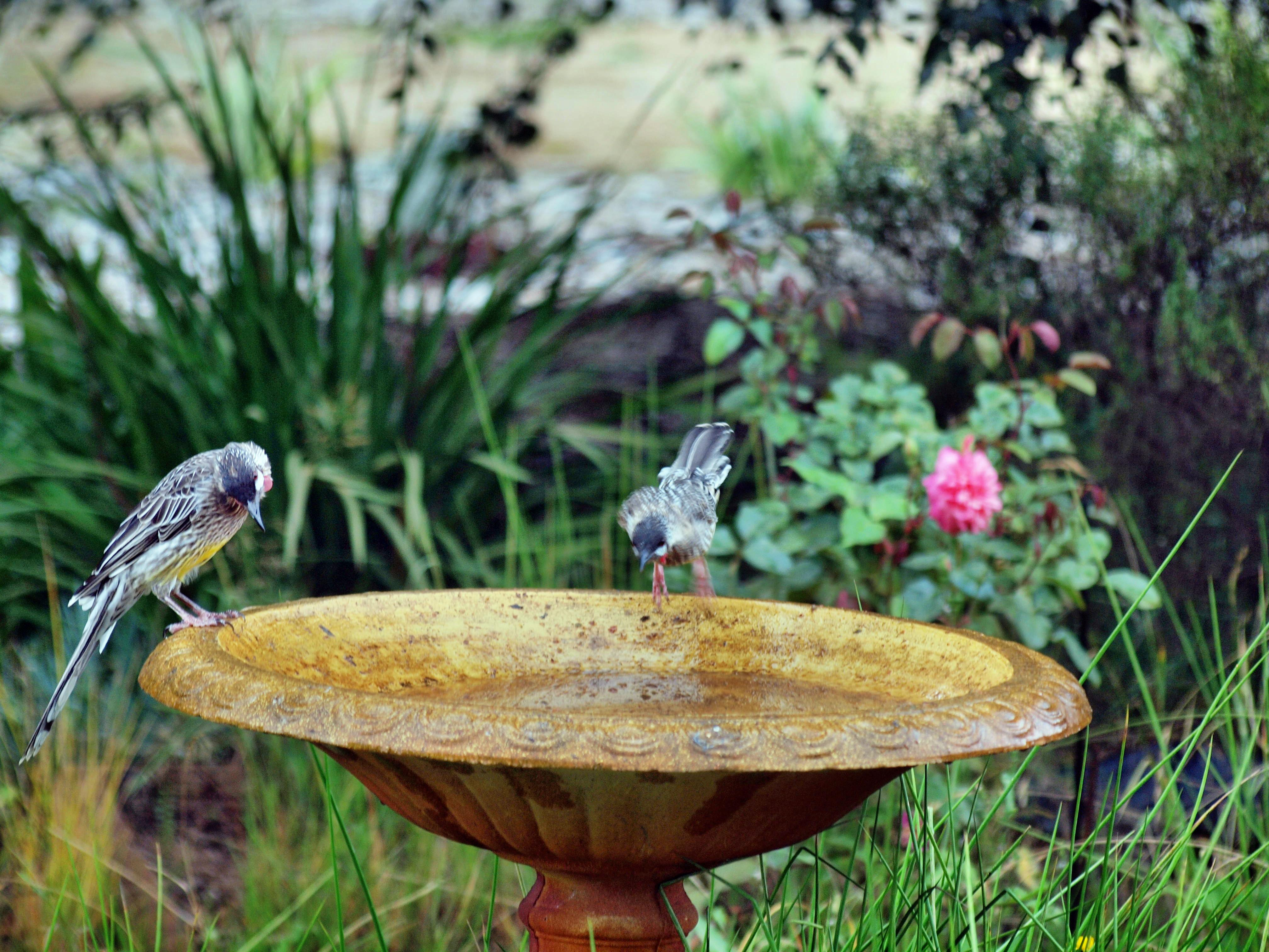 Bird-bath-22.jpeg