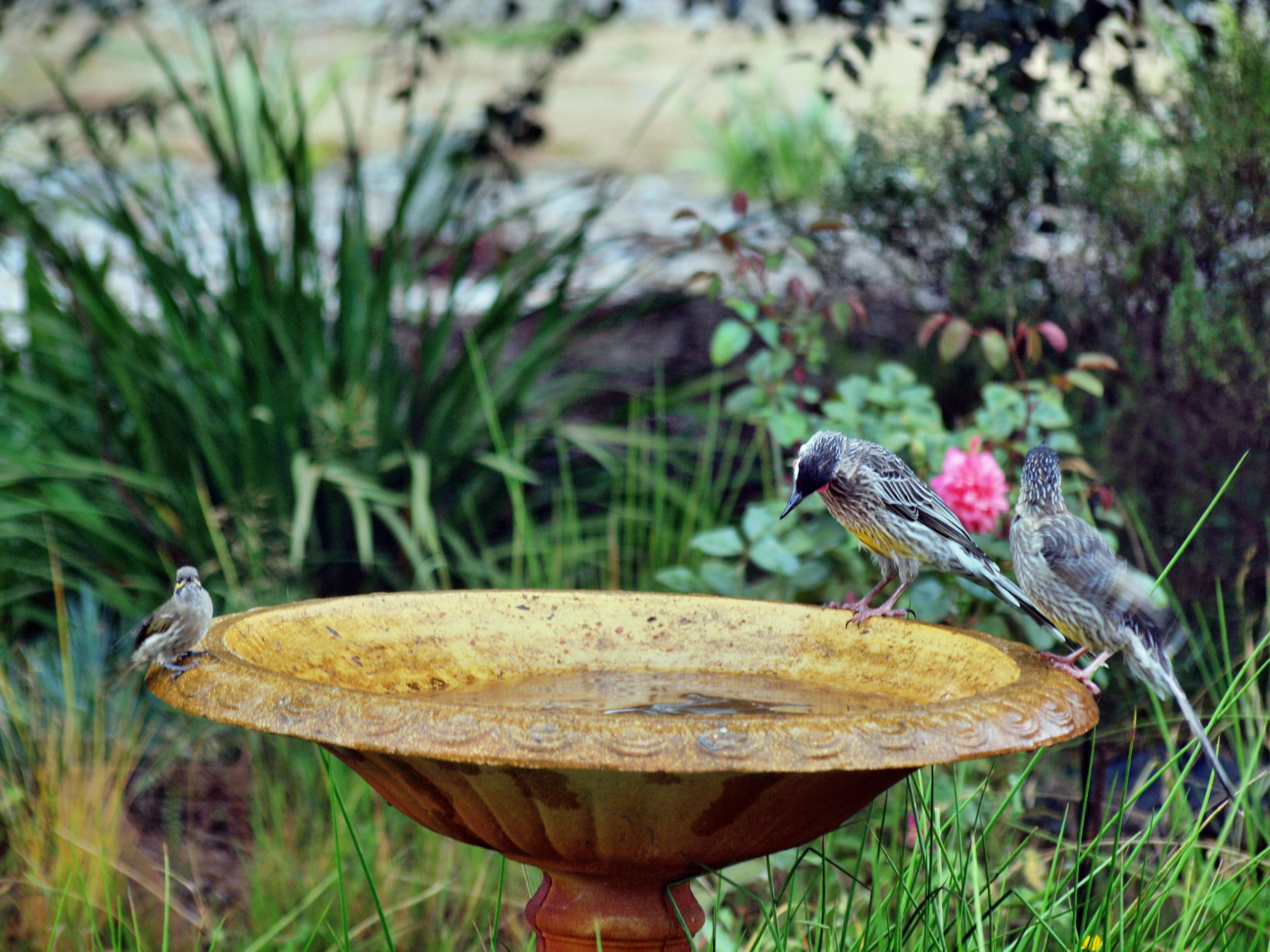 Bird-bath-23.jpeg
