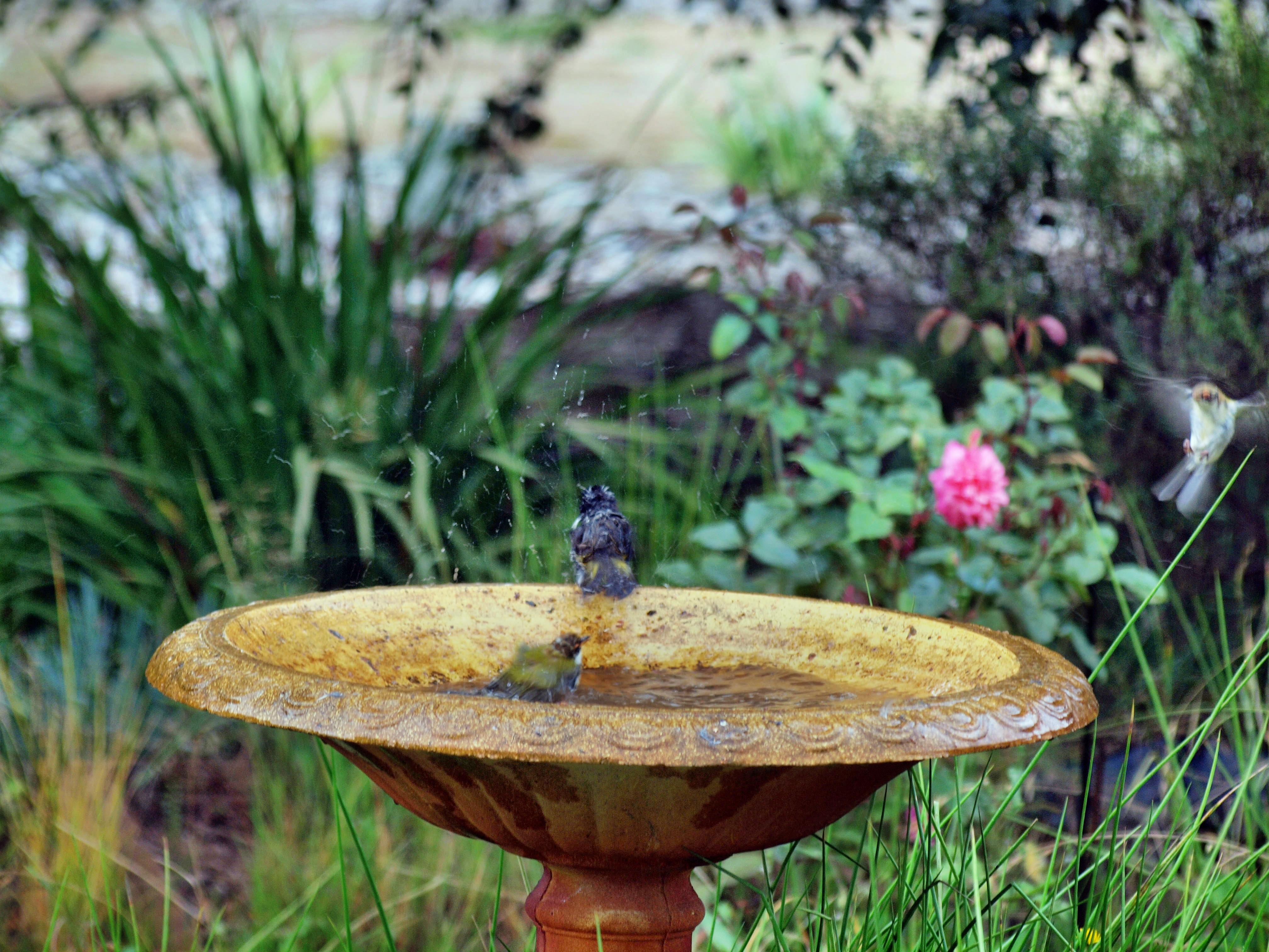 This should be Bird-bath-24.jpeg.  Is it missing?