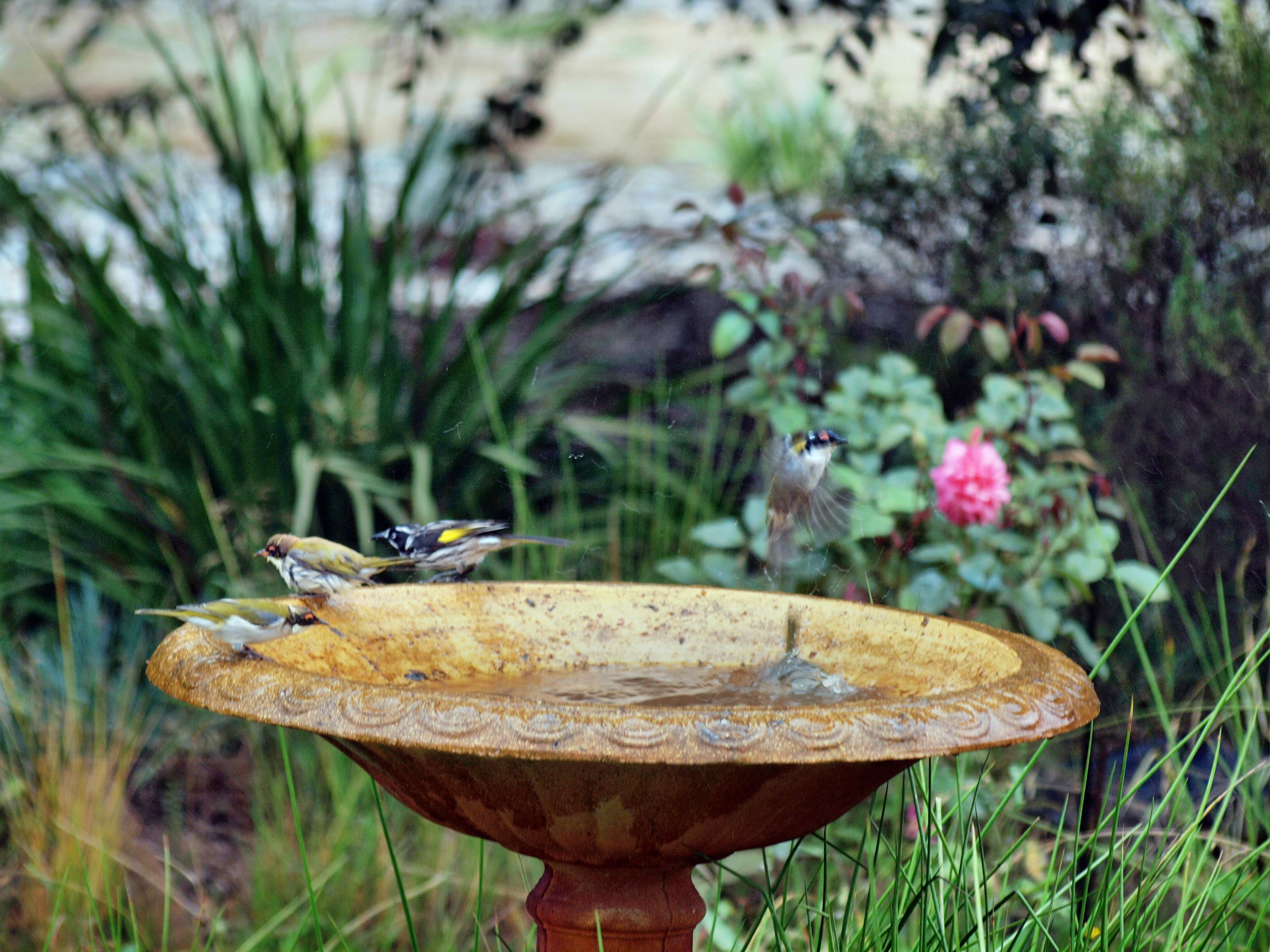 This should be Bird-bath-27.jpeg.  Is it missing?