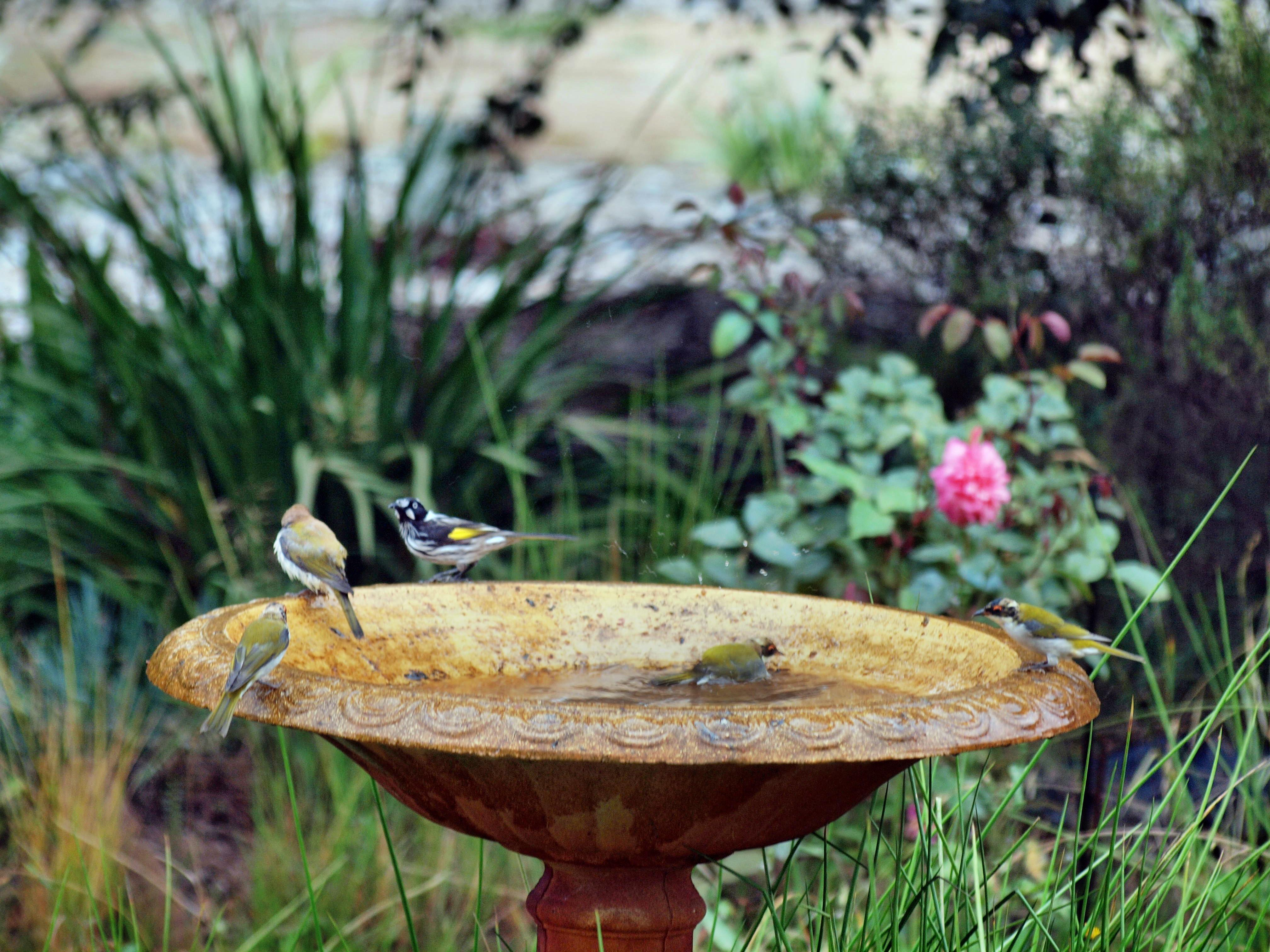 Bird-bath-28.jpeg