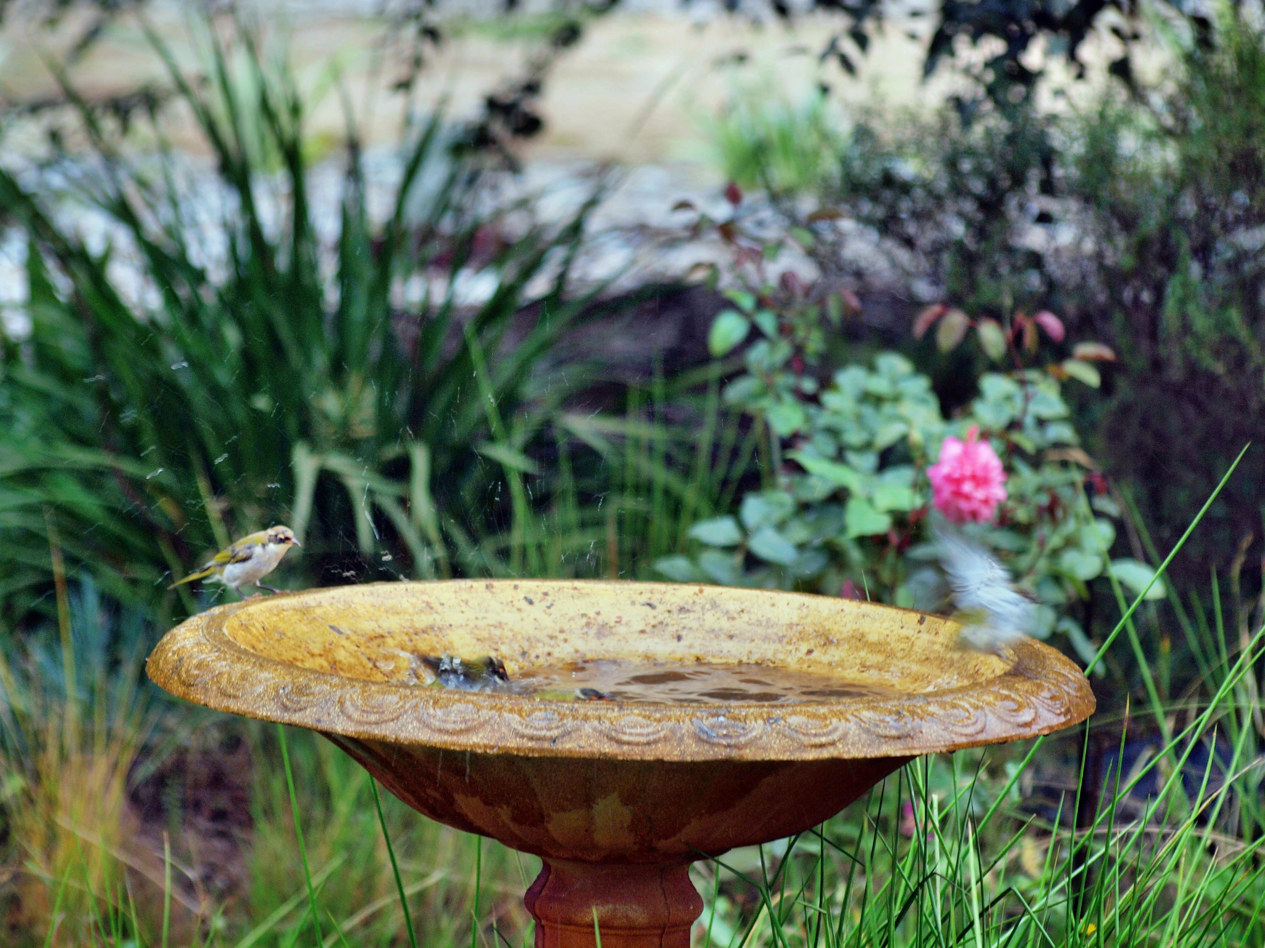 Bird-bath-29.jpeg