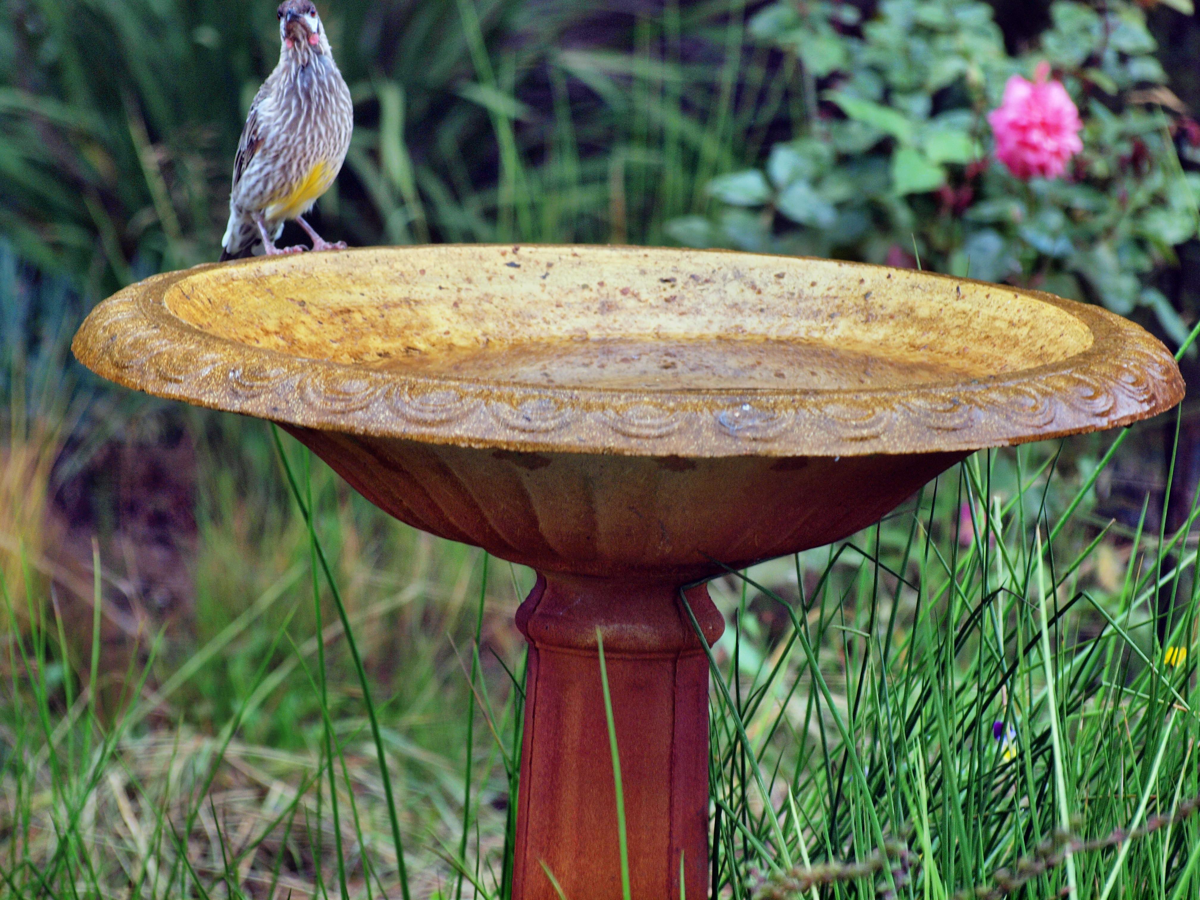 Bird-bath-3.jpeg