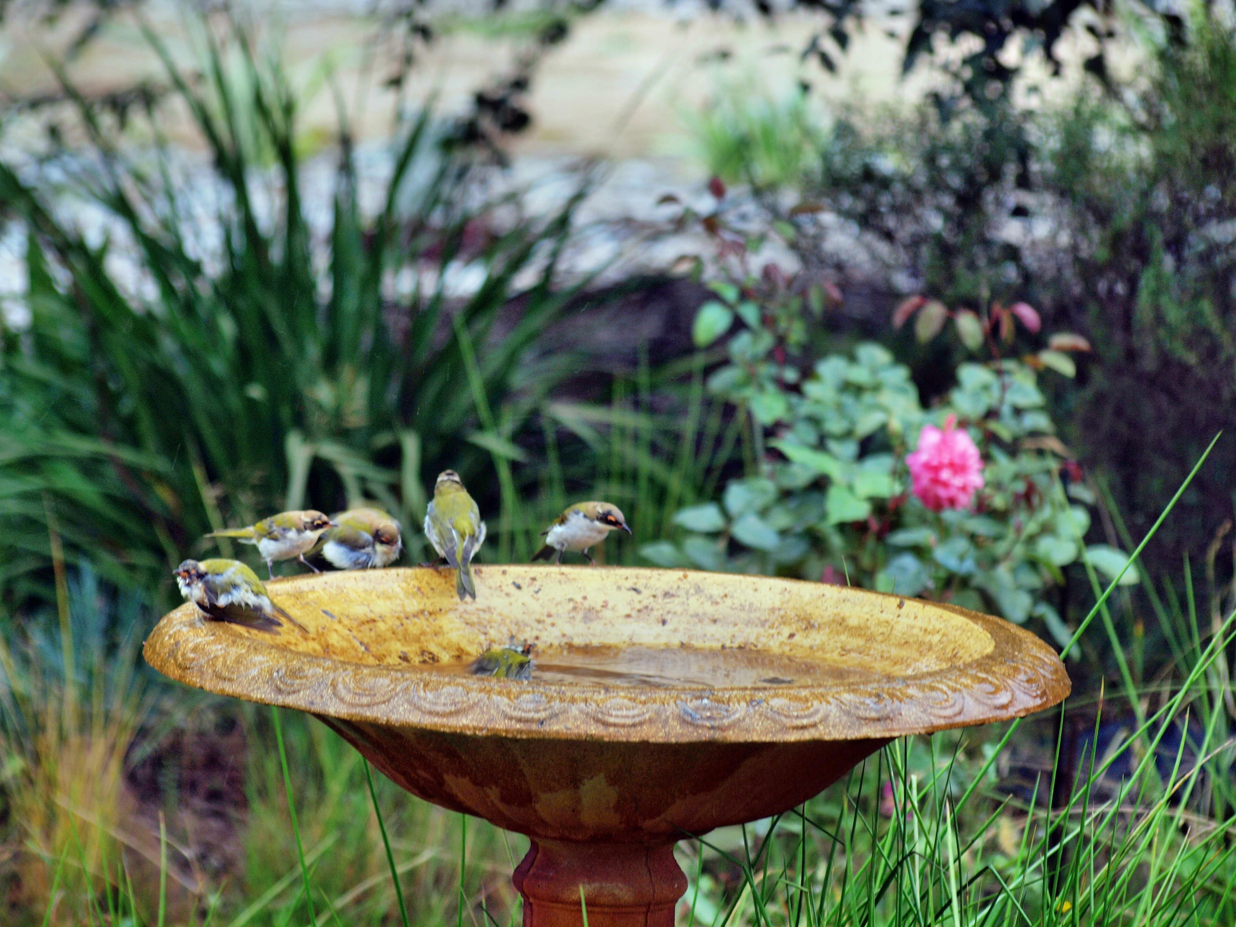 Bird-bath-30.jpeg