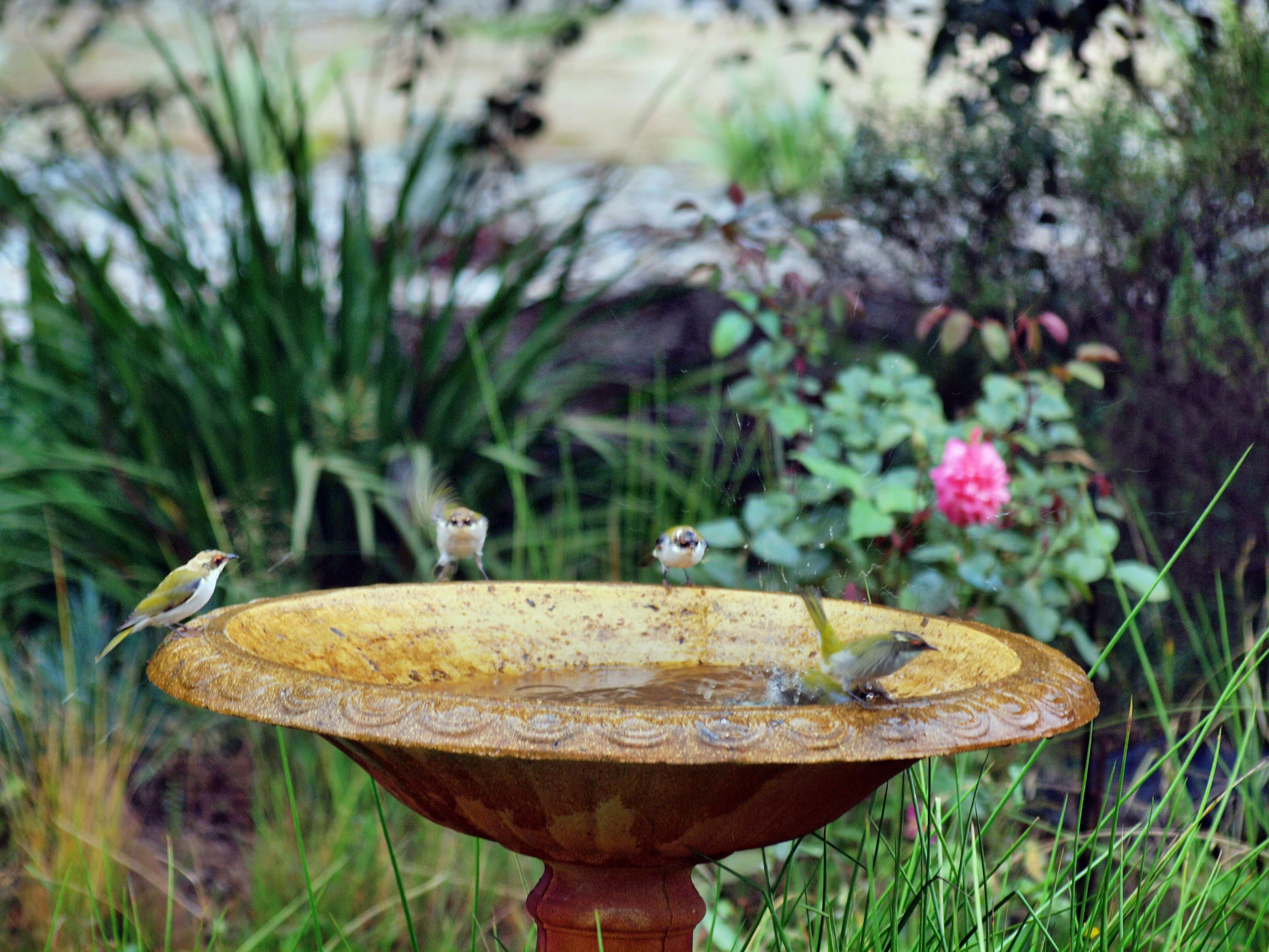 Bird-bath-32.jpeg