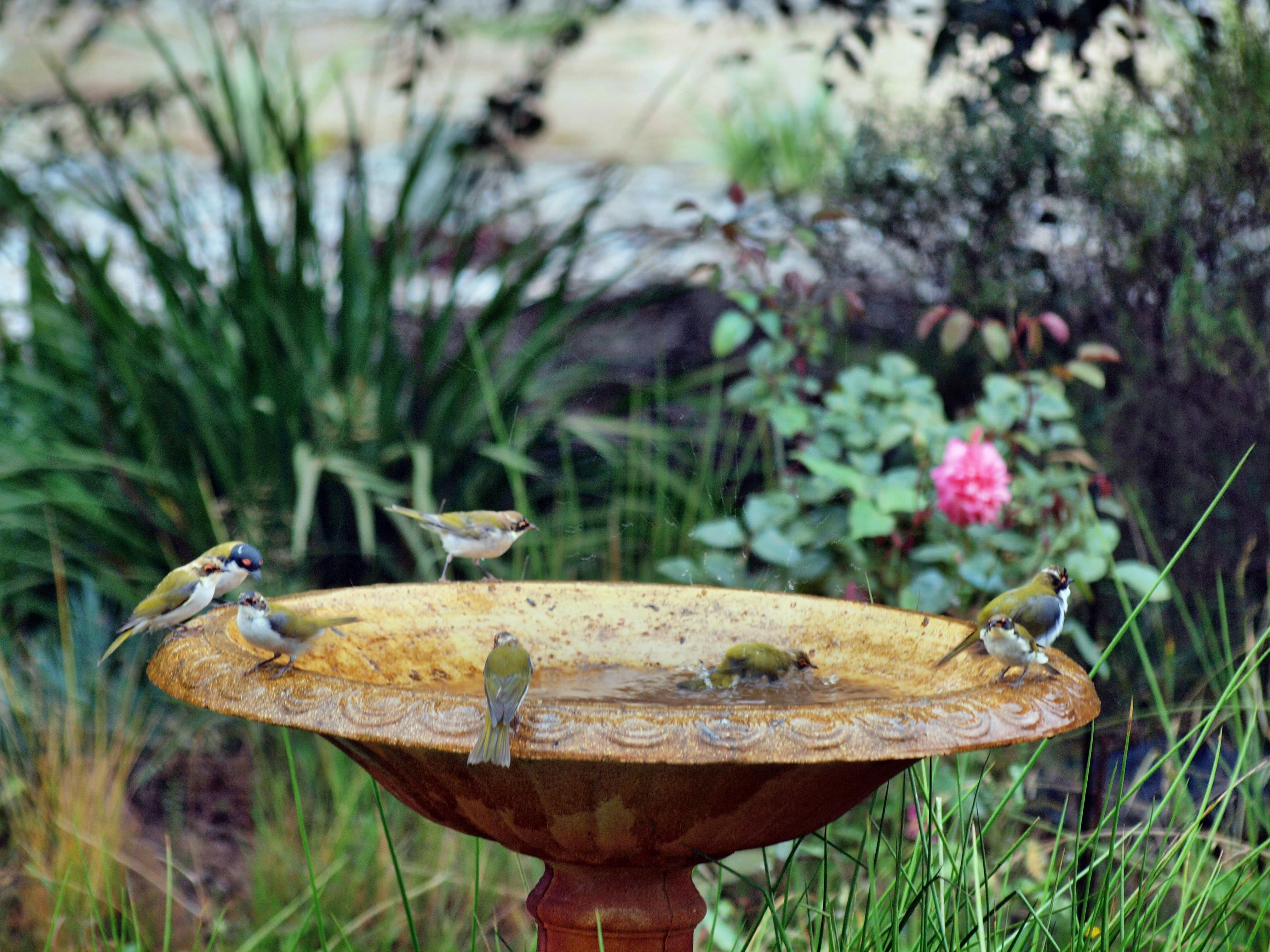 This should be Bird-bath-33.jpeg.  Is it missing?