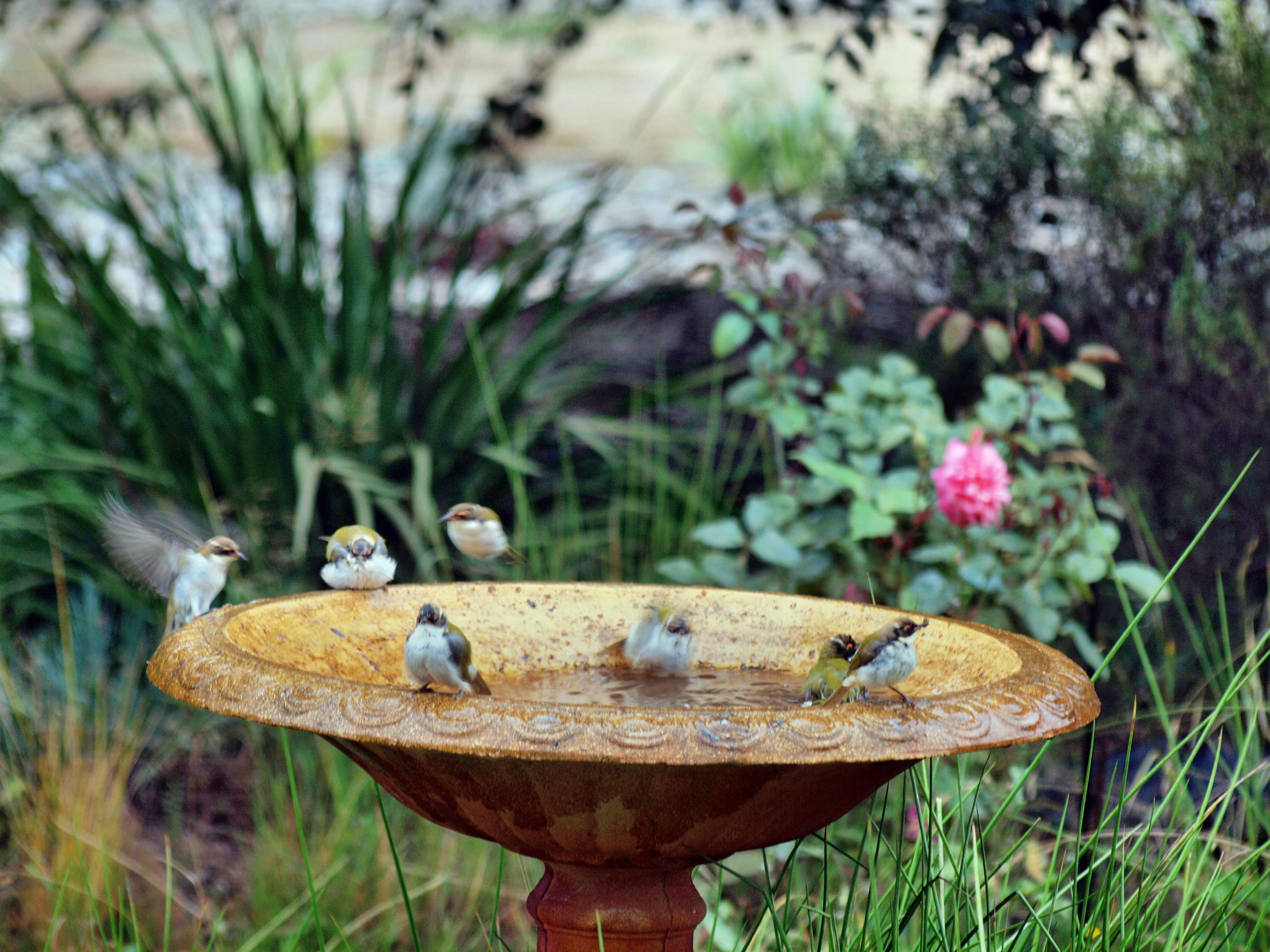 Bird-bath-35.jpeg
