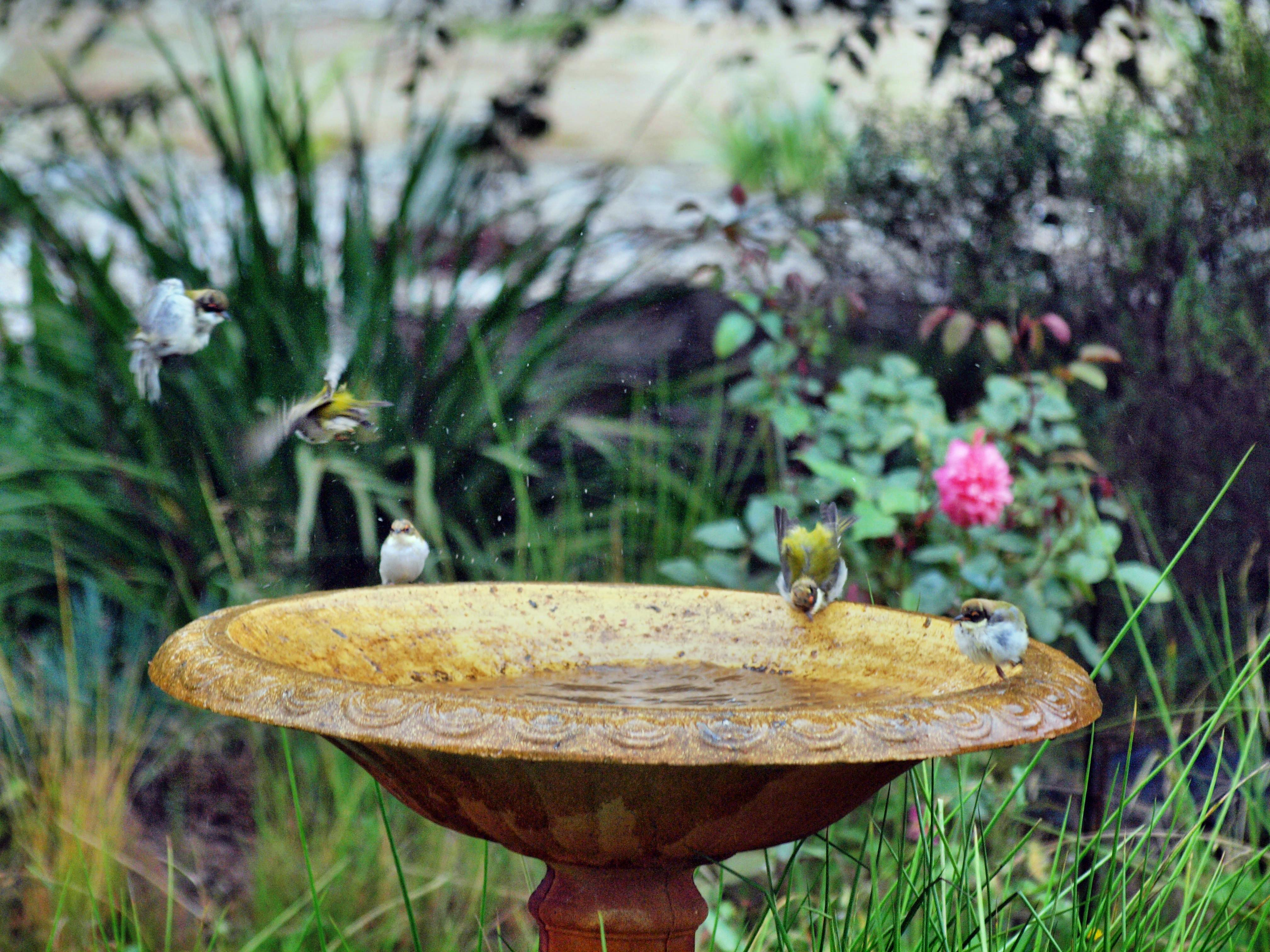 Bird-bath-37.jpeg