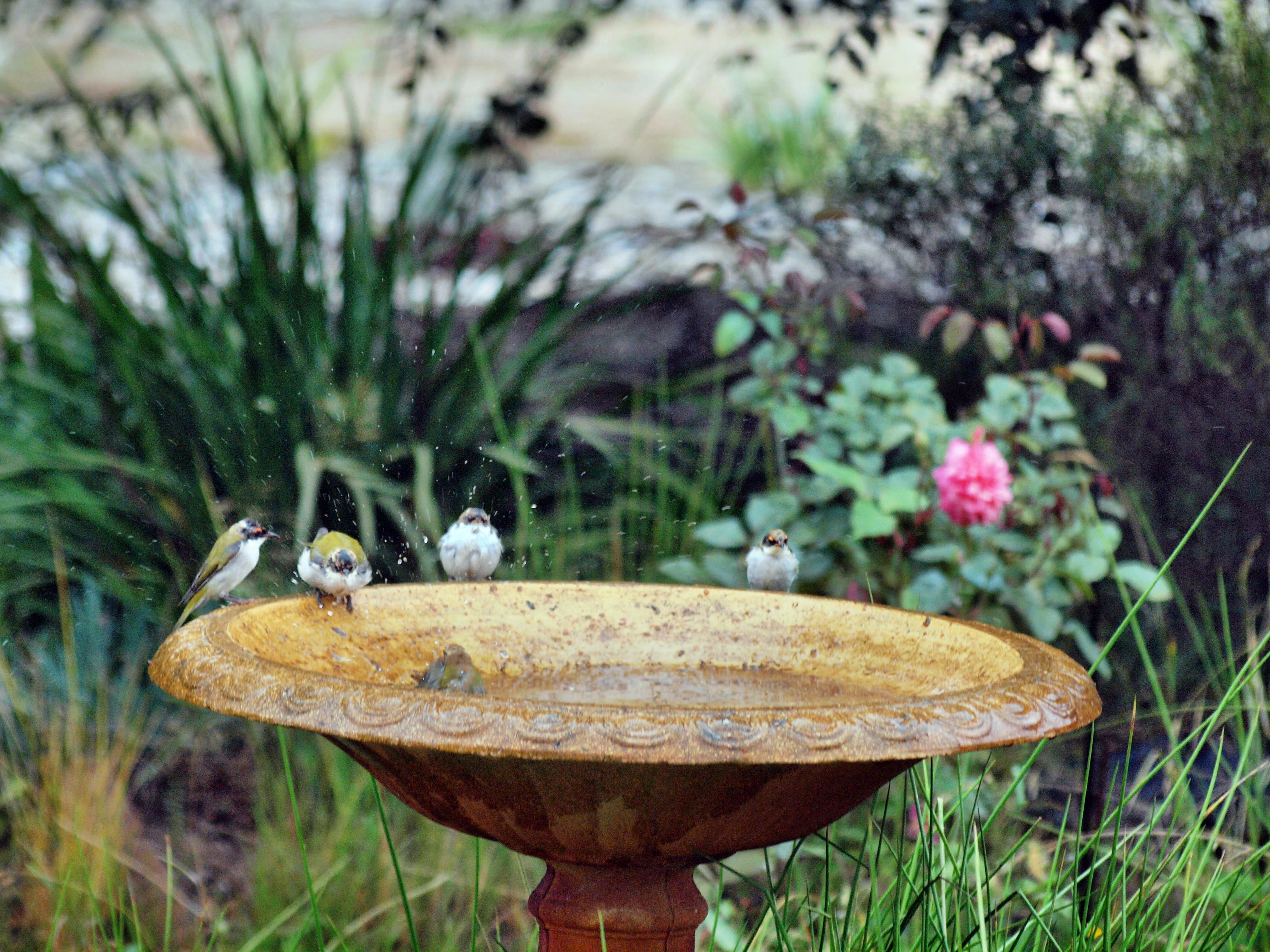 Bird-bath-38.jpeg