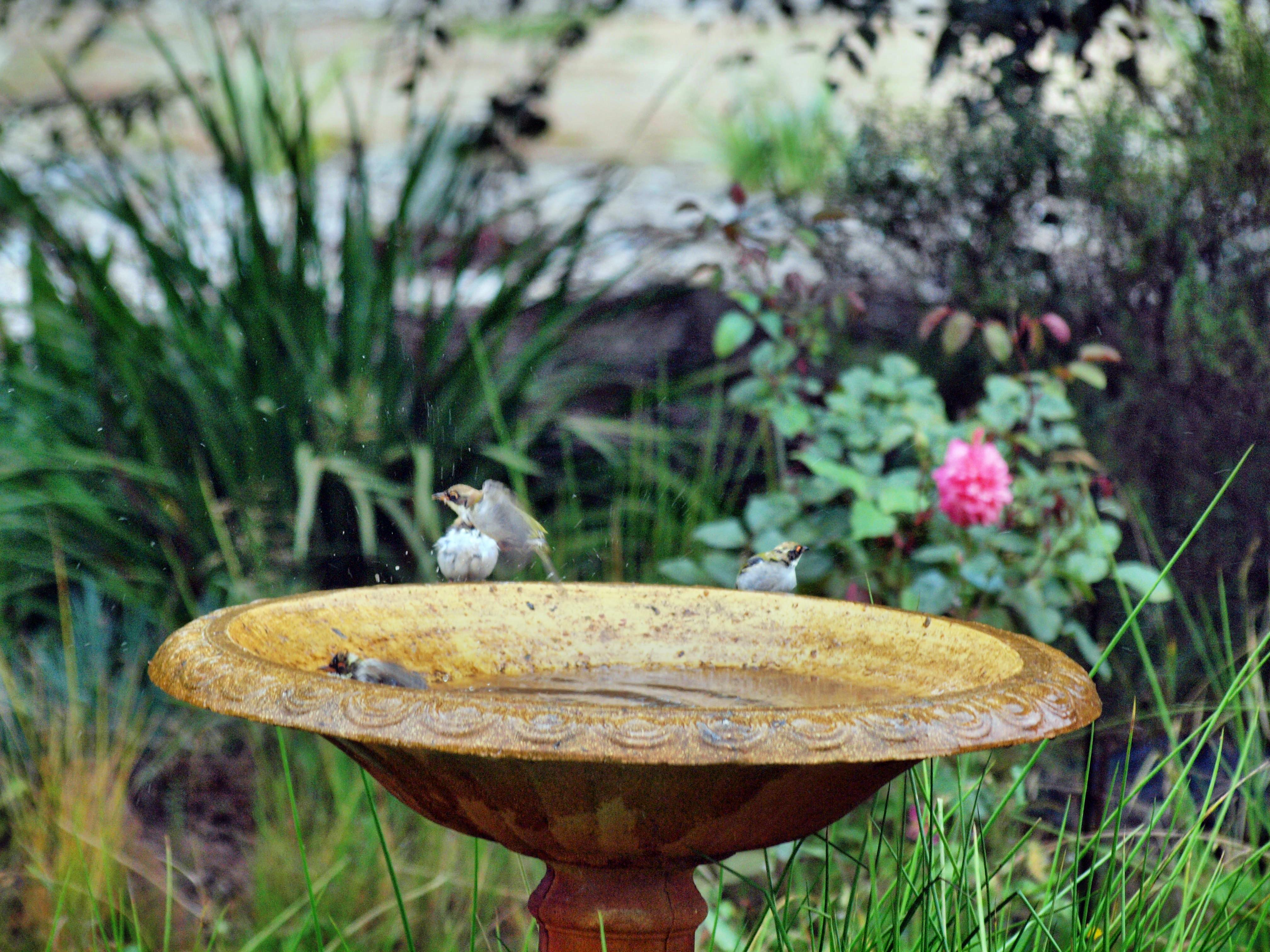 Bird-bath-39.jpeg