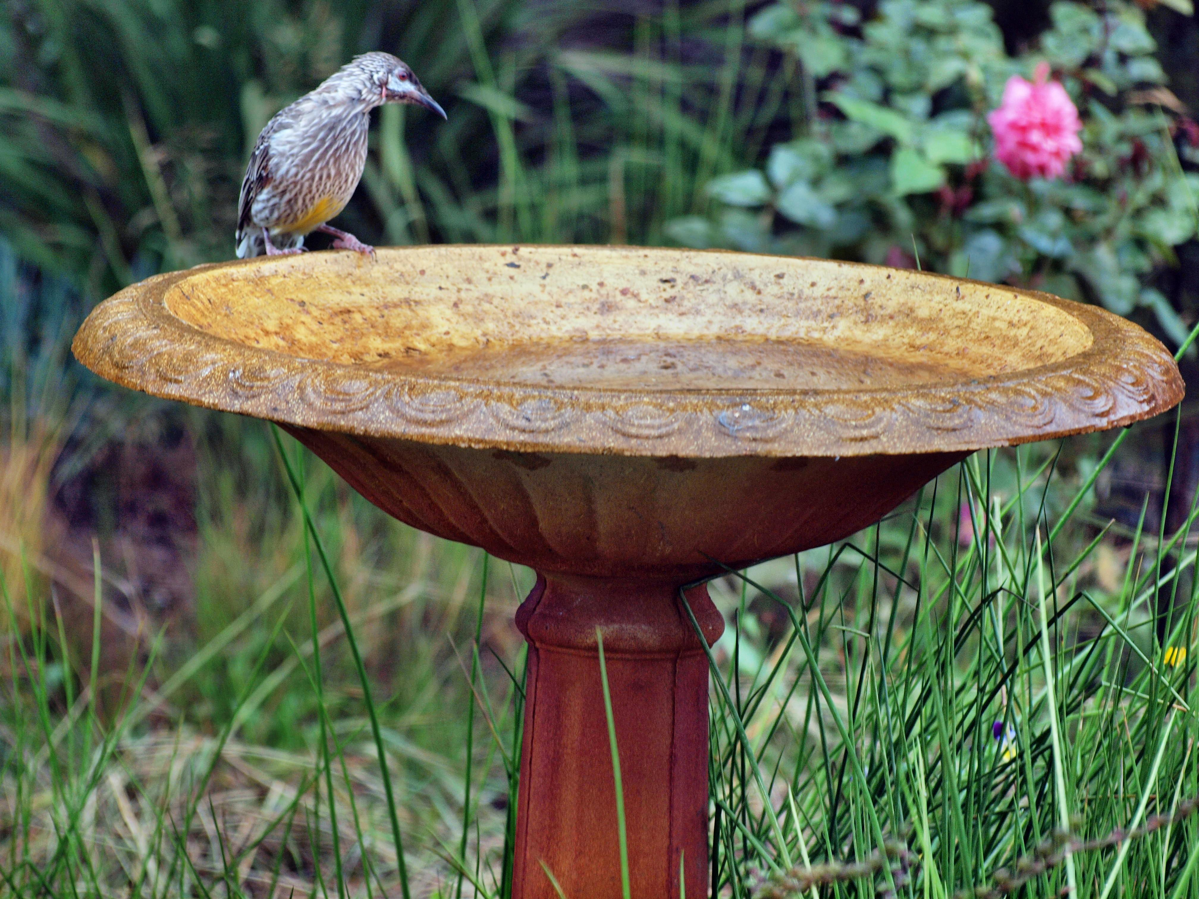 Bird-bath-4.jpeg